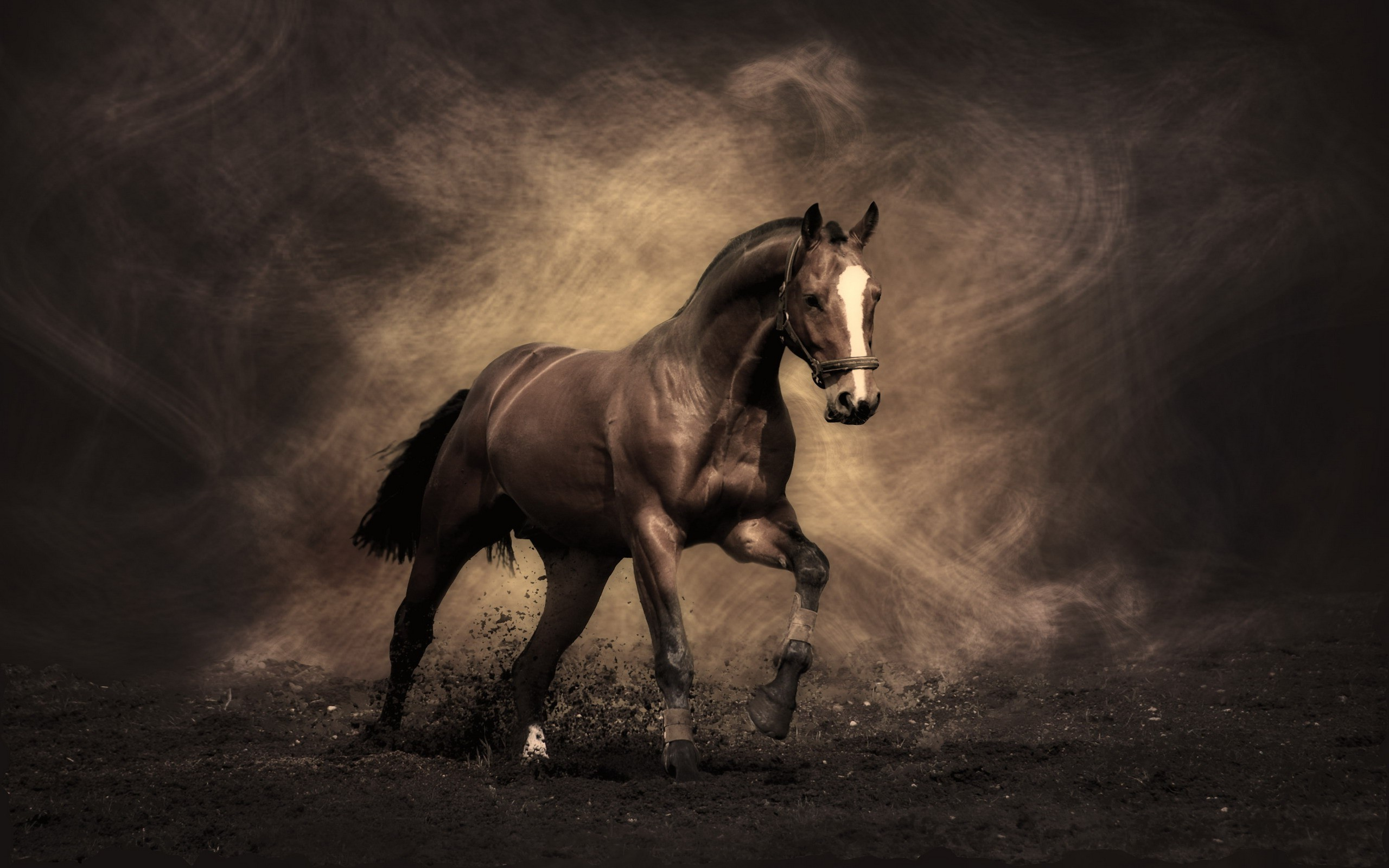pictures of horses. Â«Â«