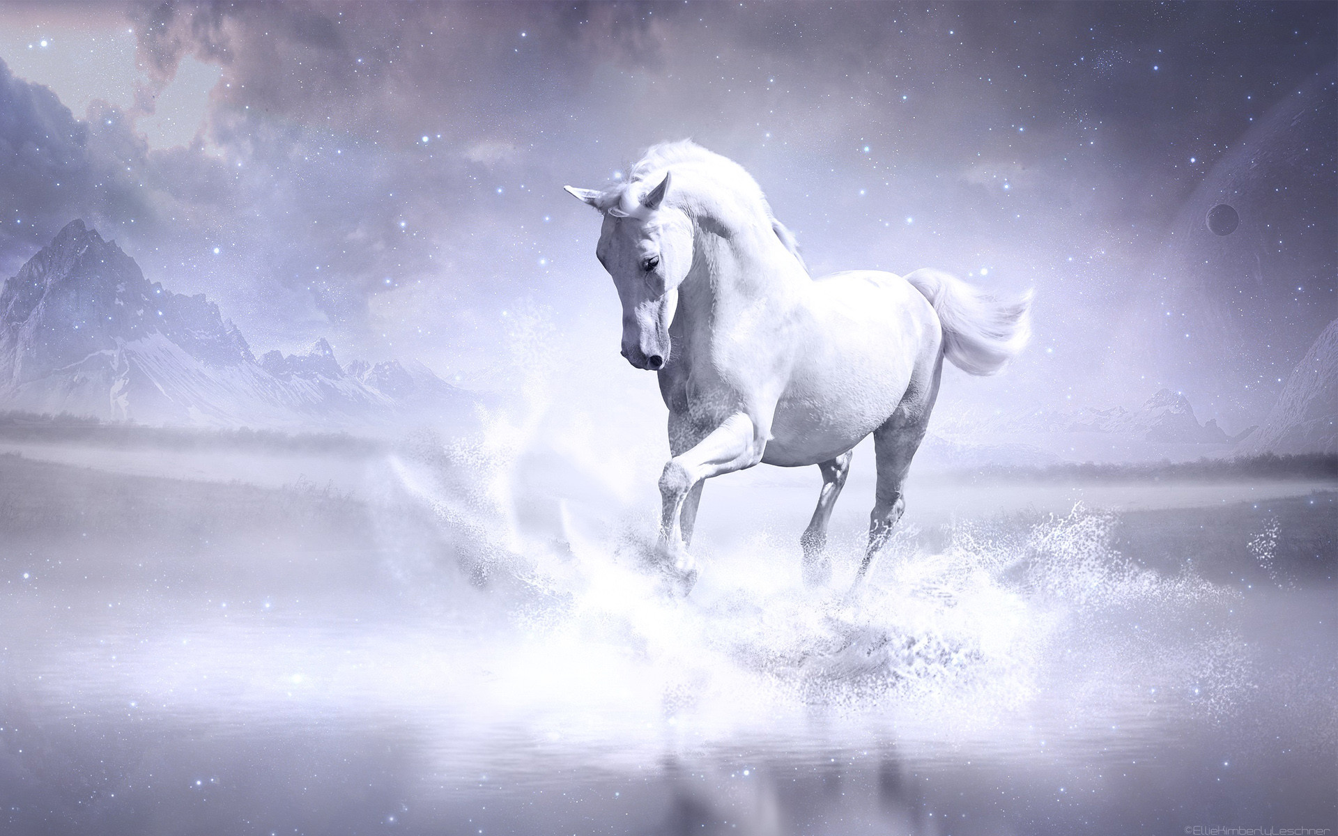 white horse wallpapers | hd wallpapers