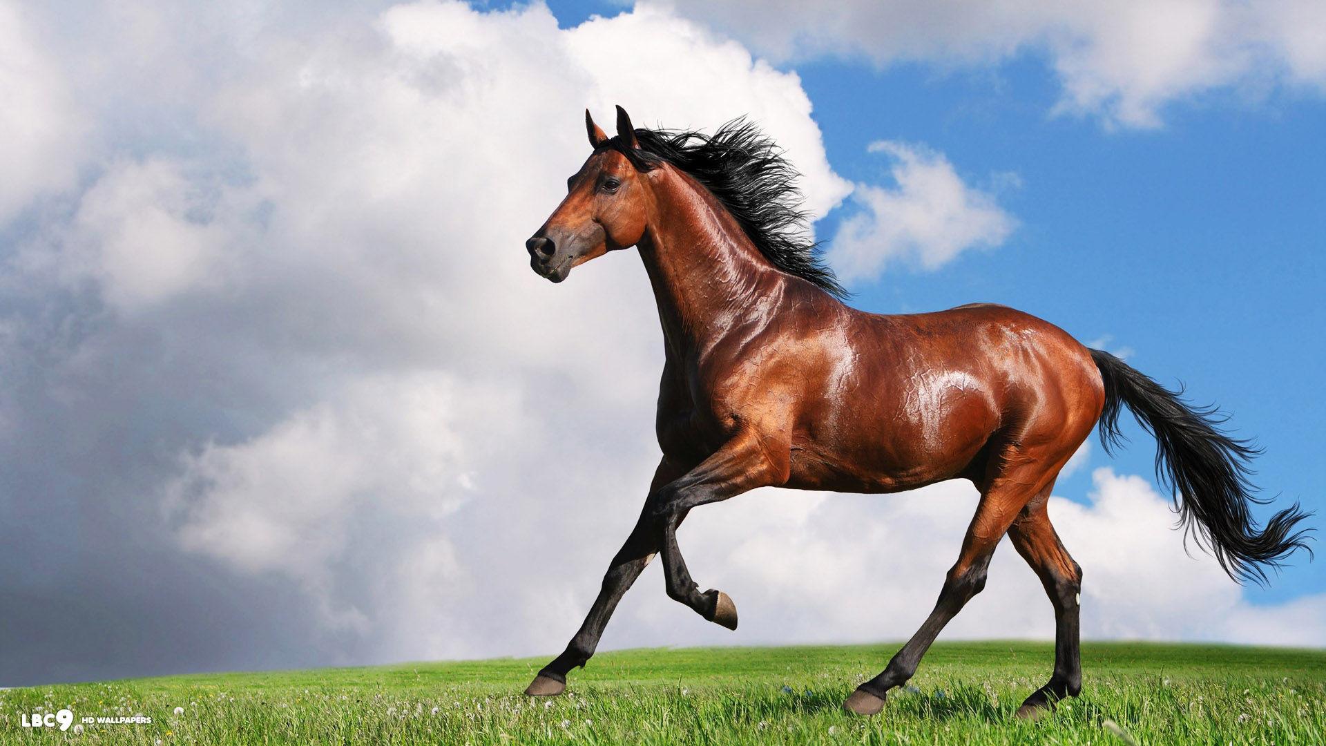 Free Horse Live Wallpaper Horse APK Download For Android GetJar 1920×1080