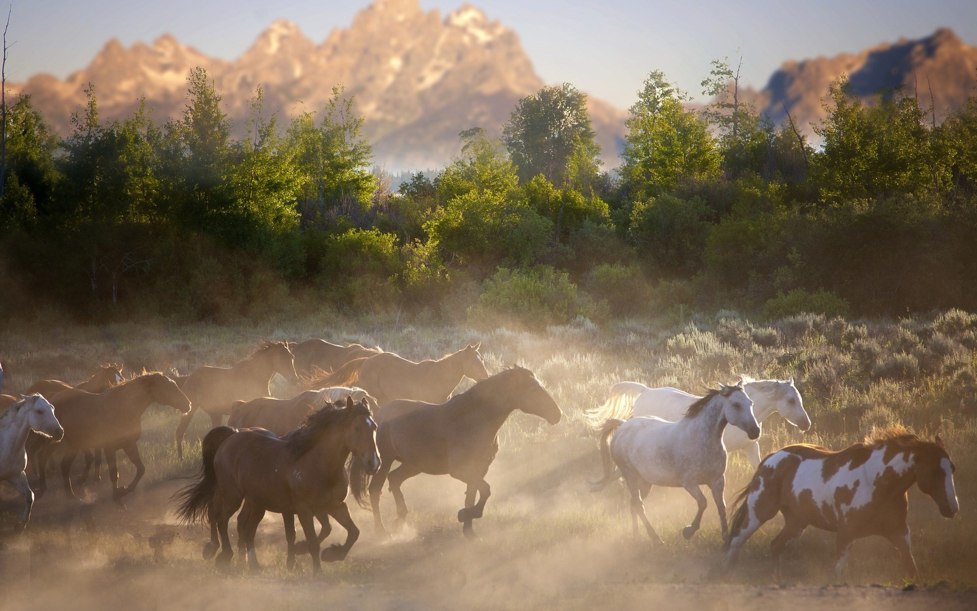 free wallpaper and screensavers for horse