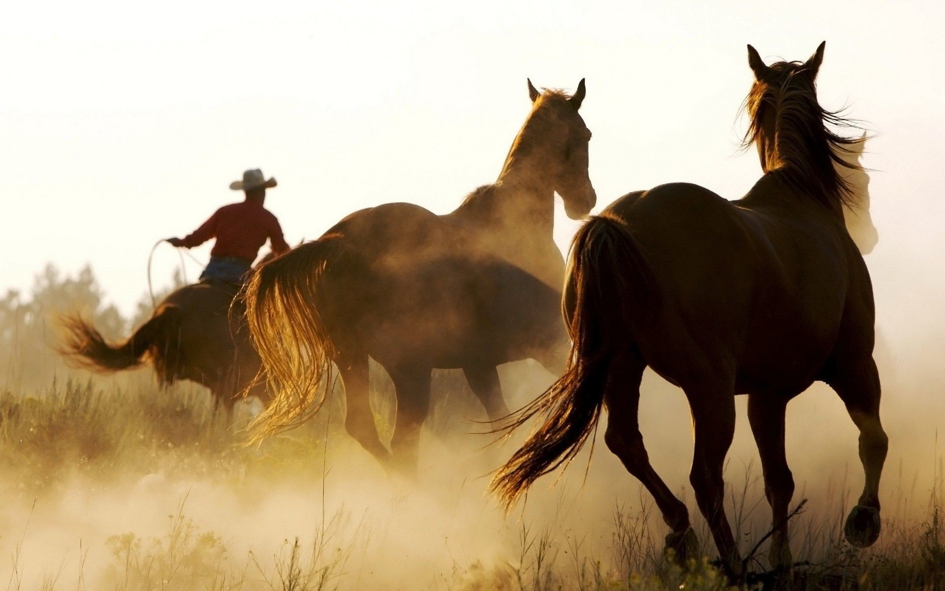 horse, Animals, Cowboys, Western Wallpapers HD
