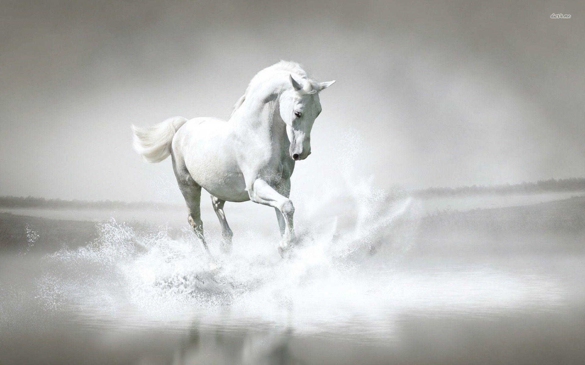Computer Horse Wallpapers, Desktop Backgrounds px