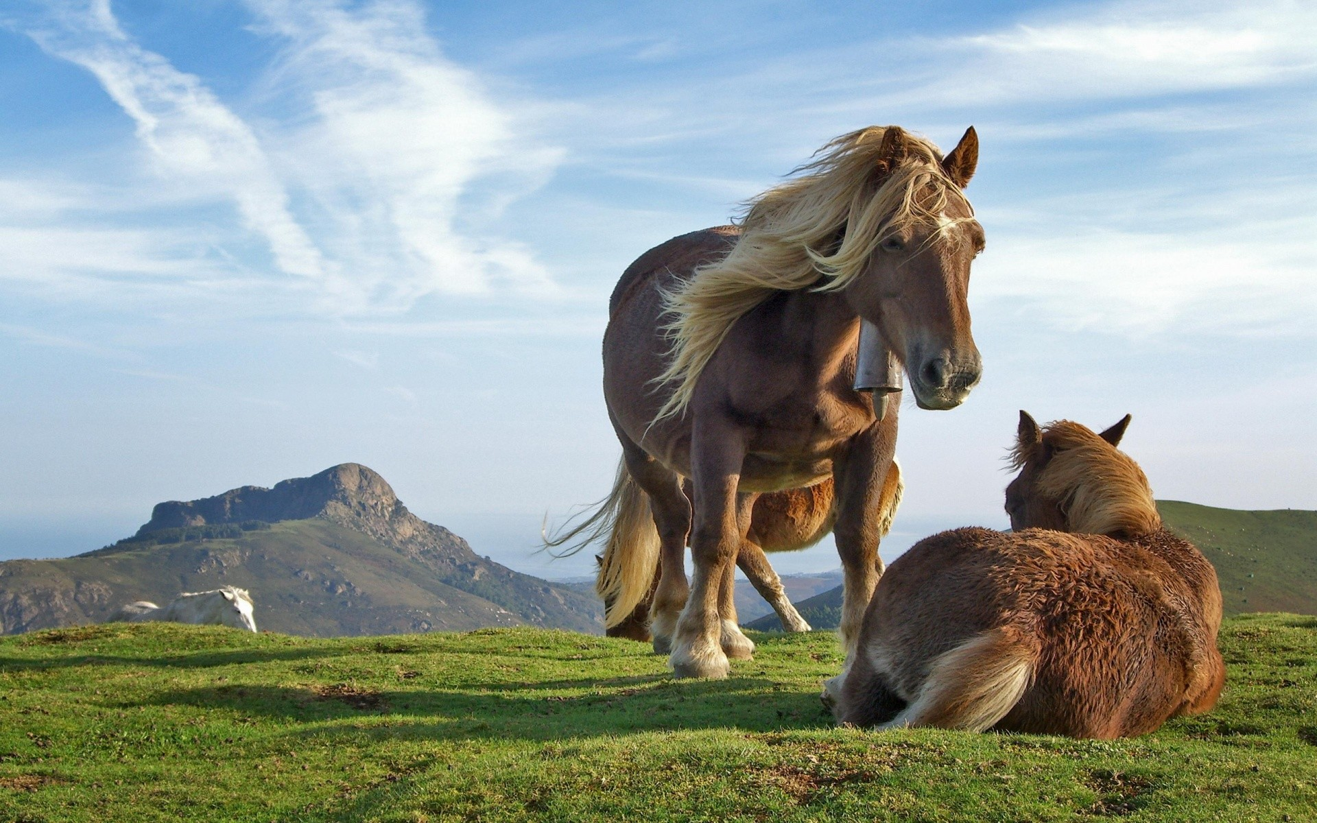 Hill Horses – other wallpaper