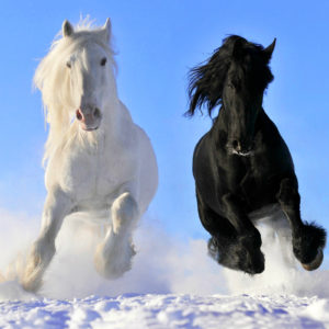 Horse Screensavers and Wallpaper