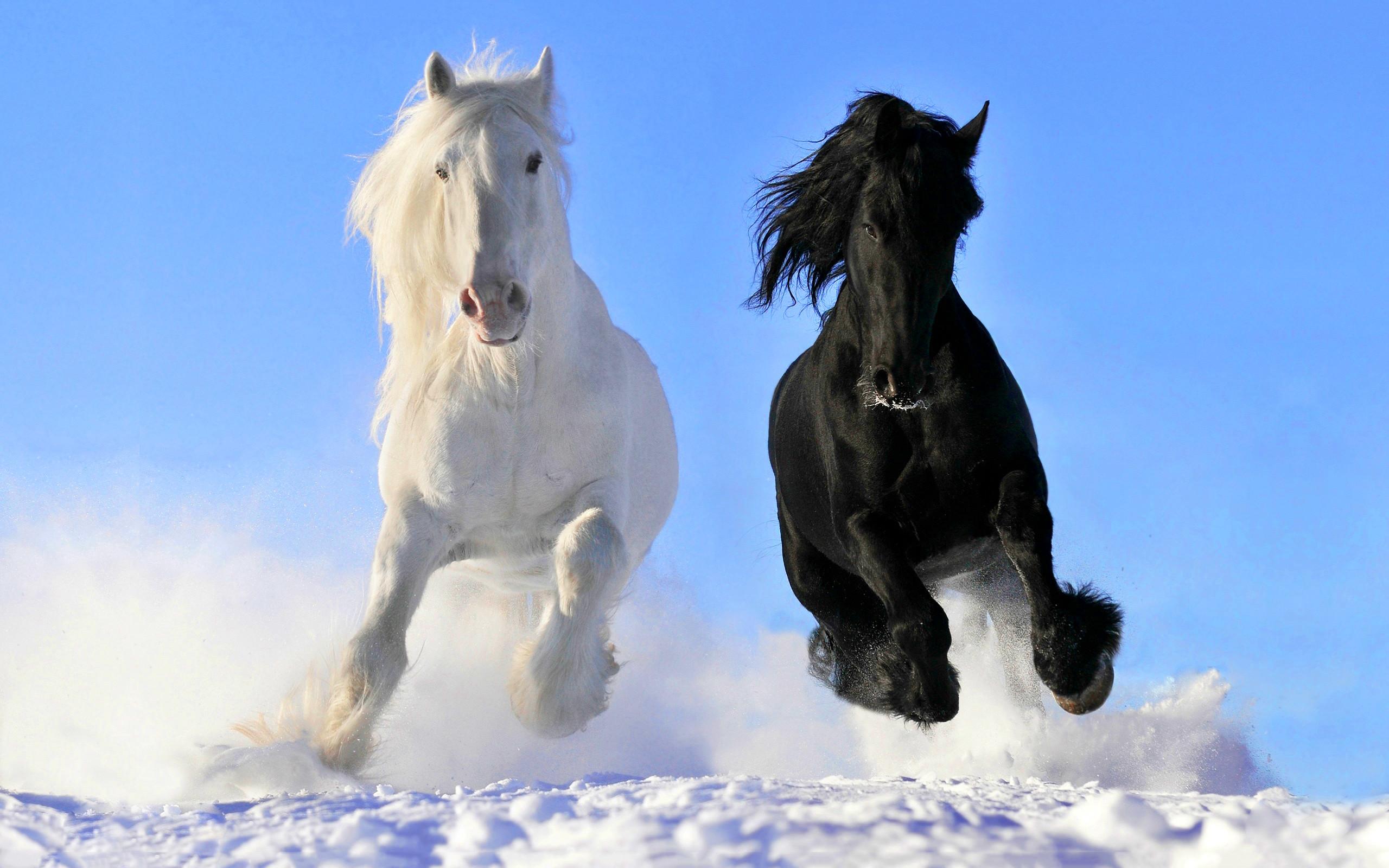 black and white horse. Â«Â«