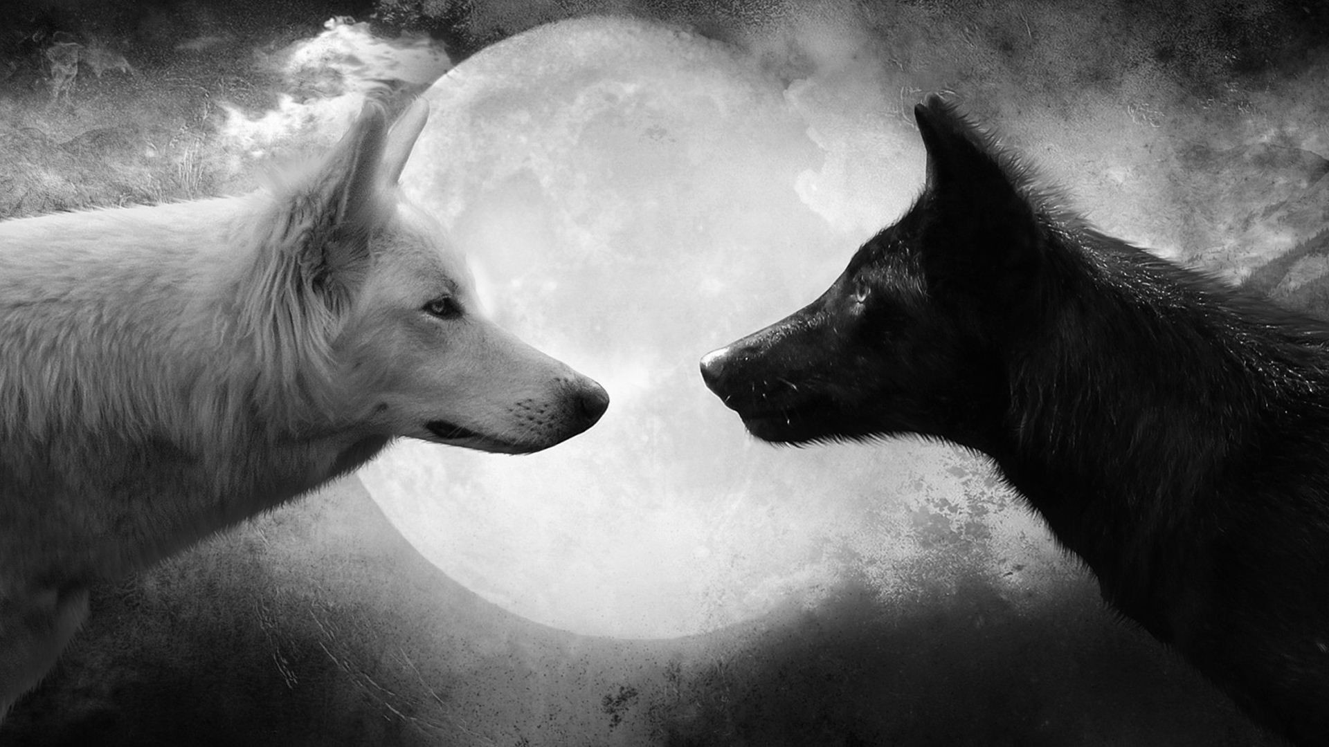 Cool Wolf Backgrounds Wallpaper 1920×1080