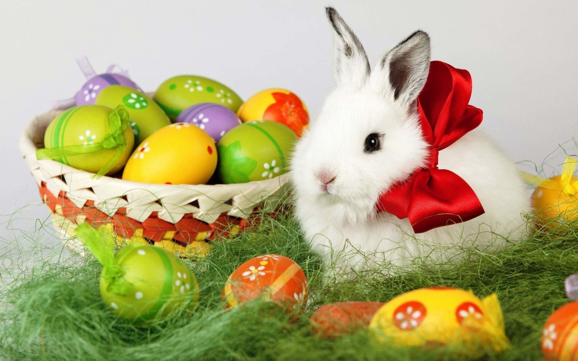 Easter Bunny And Eggs 1920×1200 Holiday Wallpaper | Cool PC Wallpapers