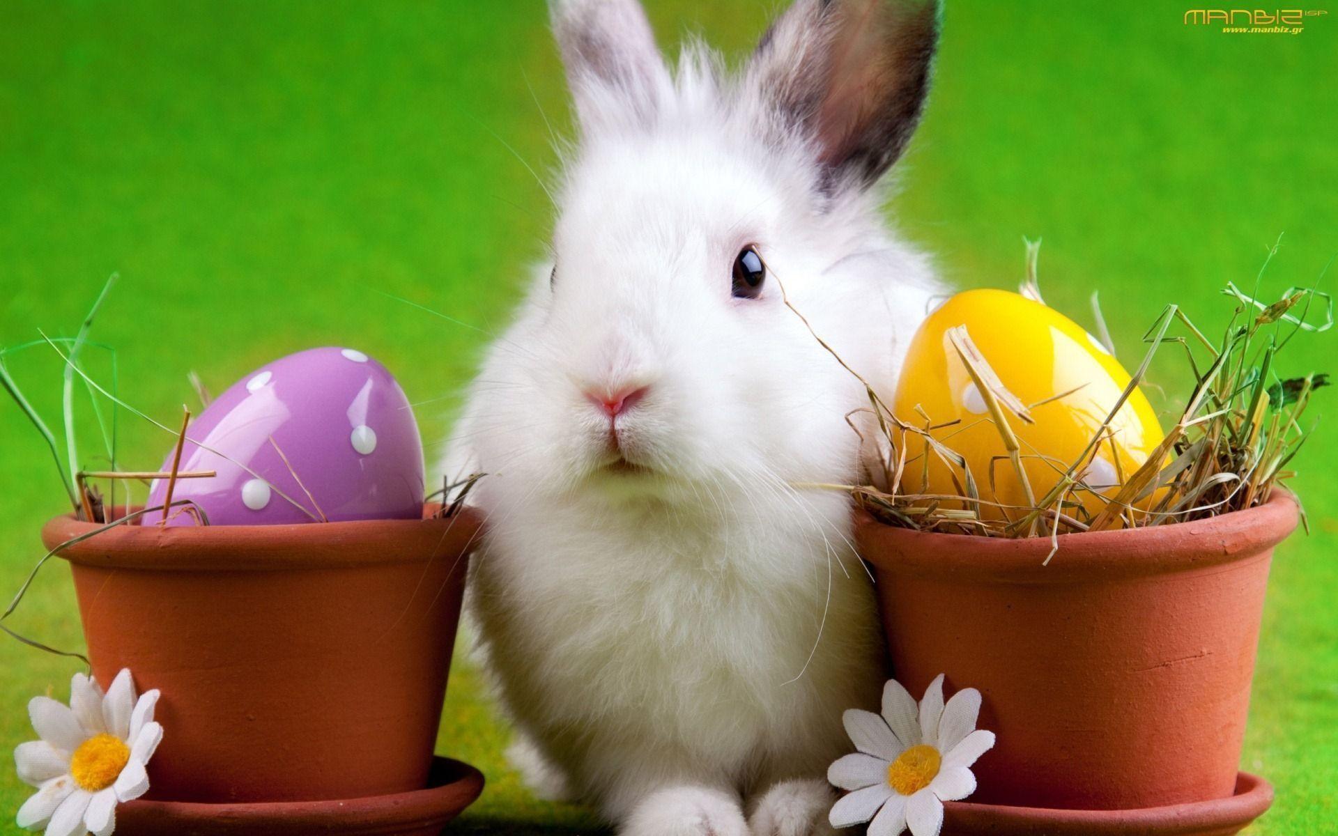 easter bunny wallpaper desktop1 Easter Bunny Wallpaper Desktop .
