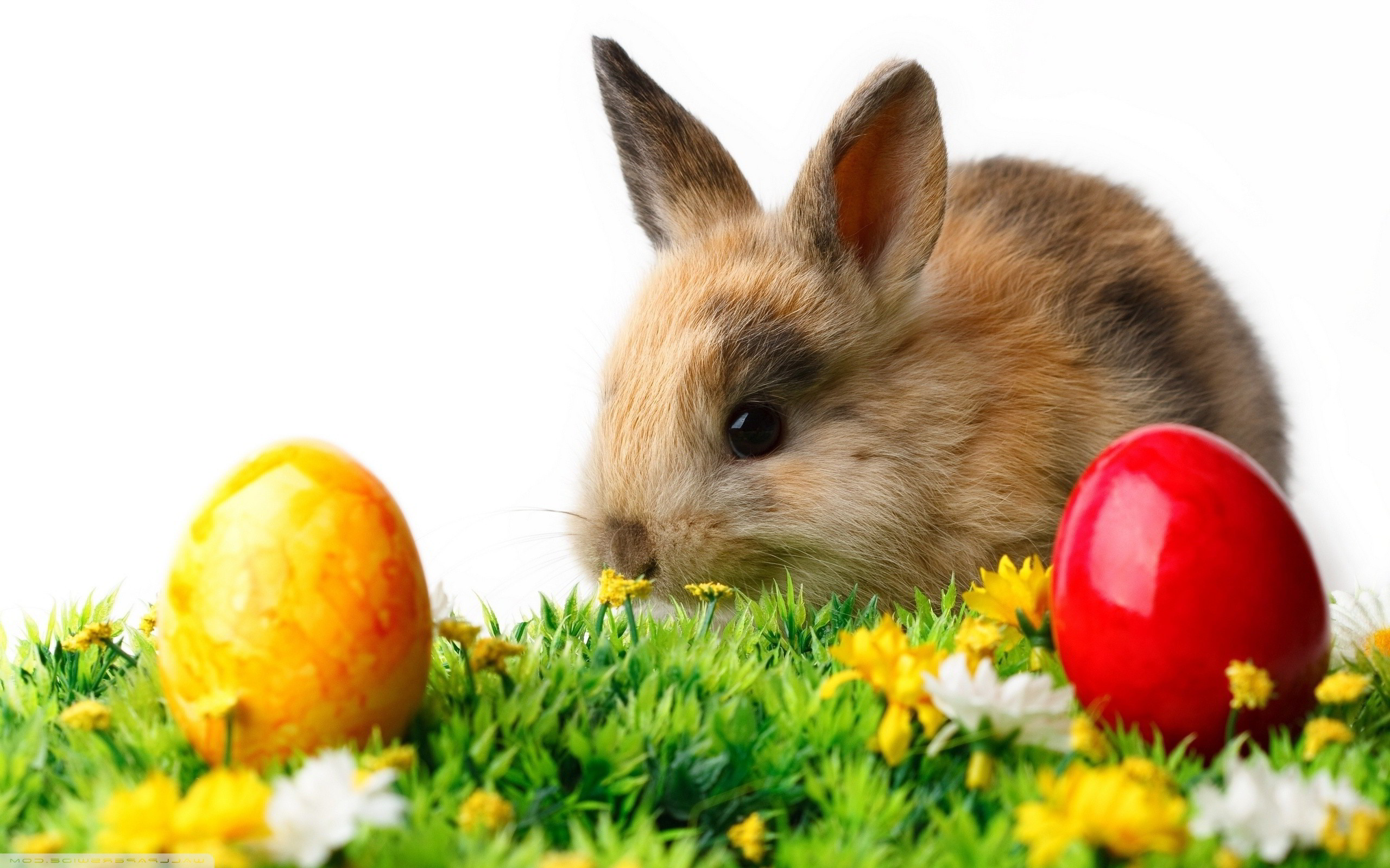 Rabbit easter eggs Wallpapers | Pictures