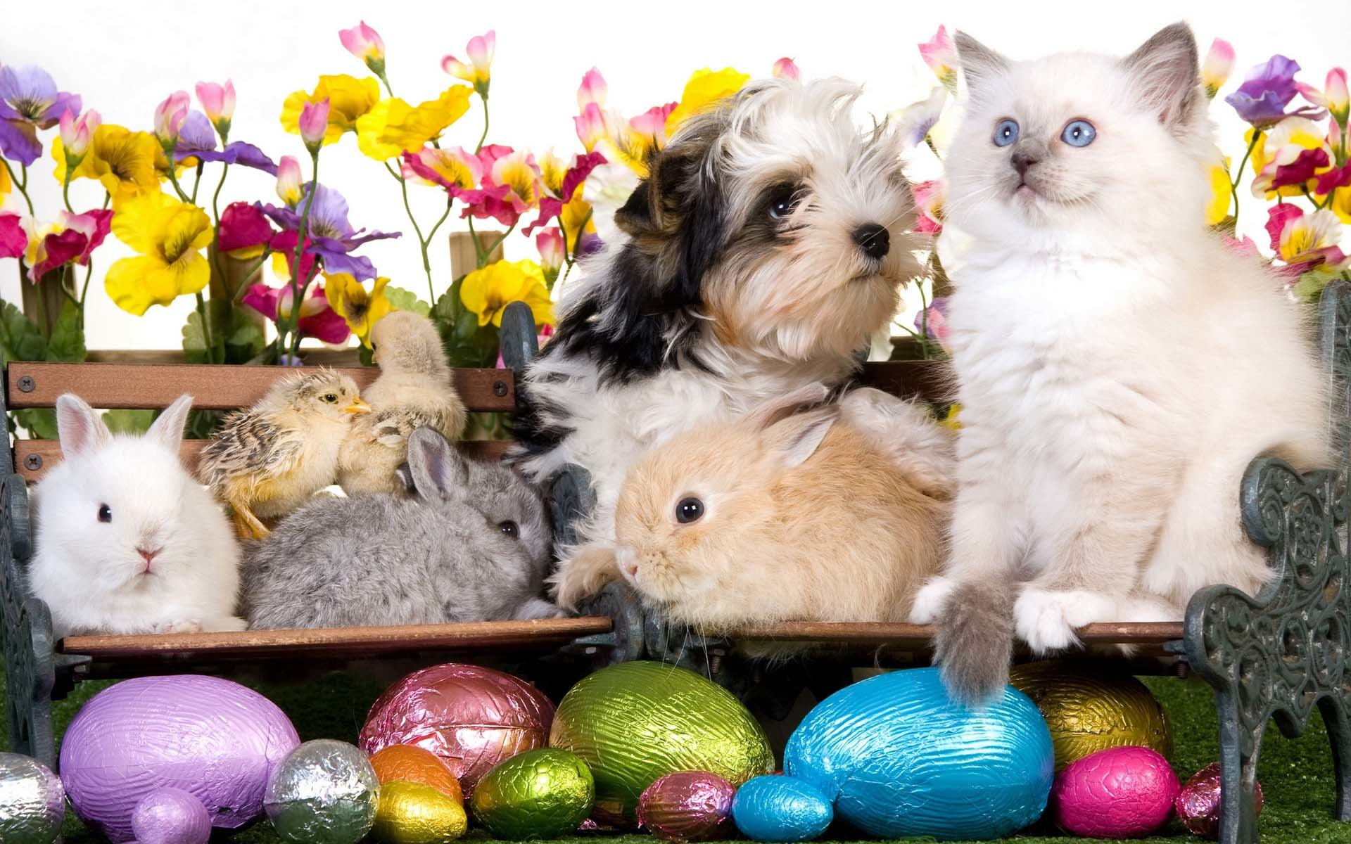 Hapy Easter Kitten Dog Puppy Rabbits Chickens Eggs Flowers  Wallpaper – Cool PC Wallpapers