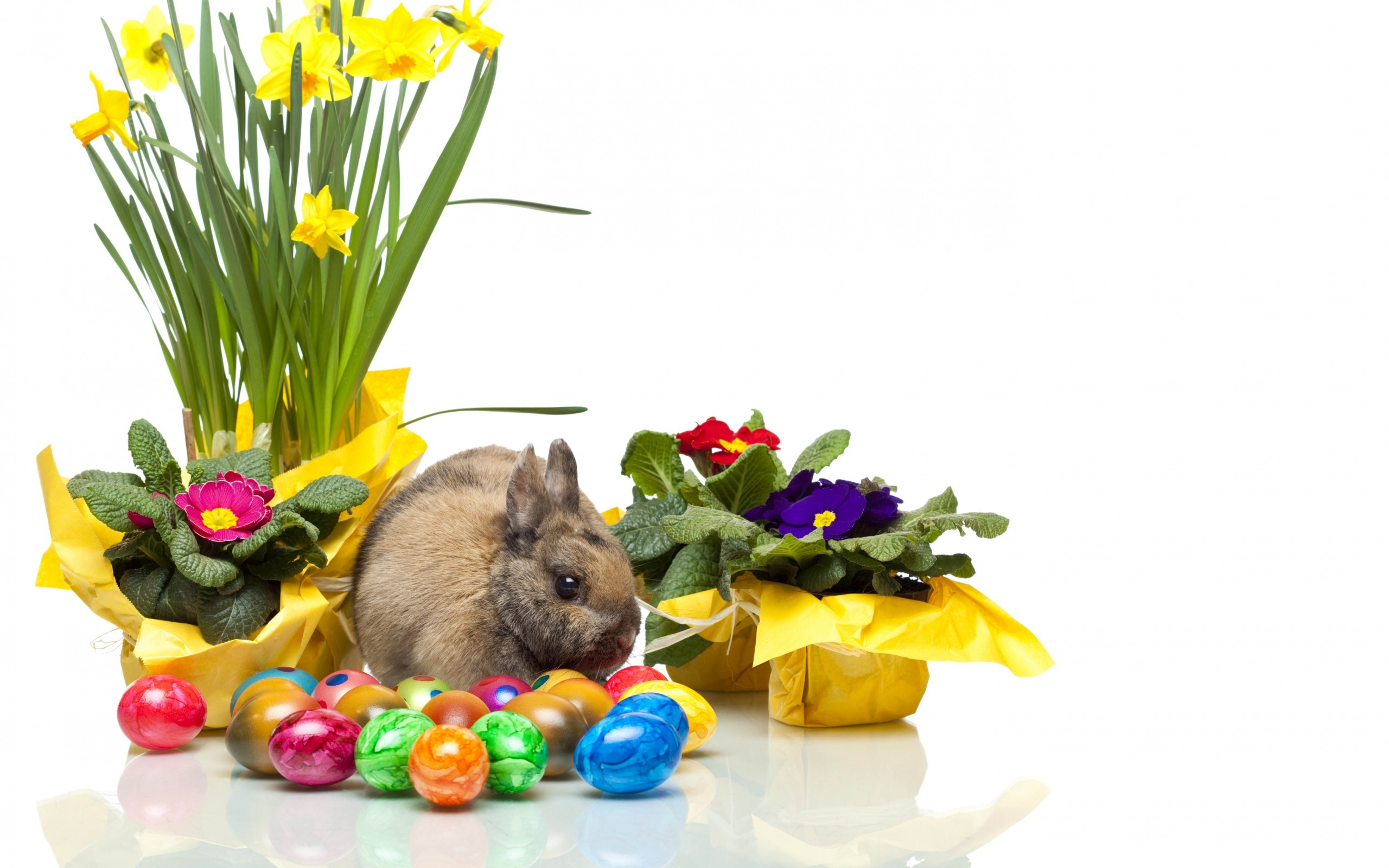 Wallpaper easter, bunny, eggs, violets, daffodils, white  background