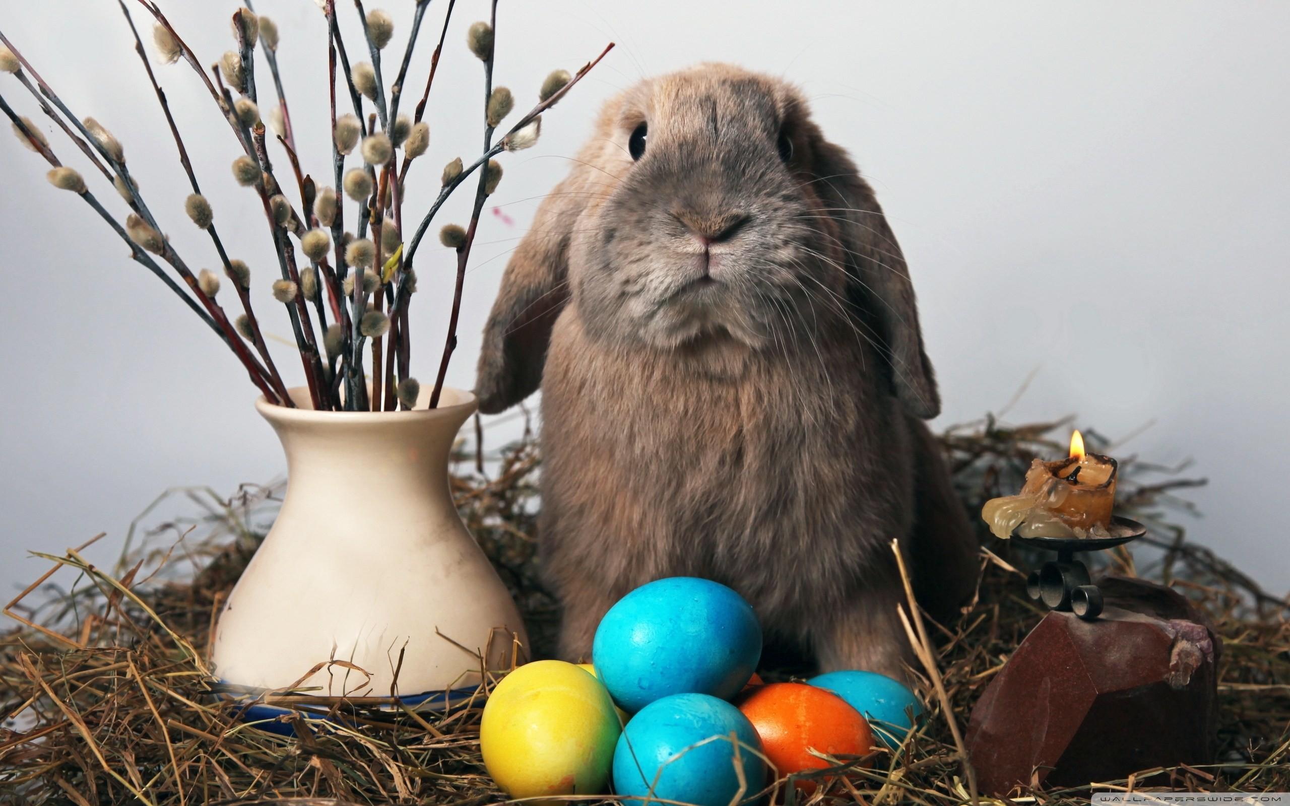 Easter Bunny Hd Desktop Wallpaper High Definition Fullscreen