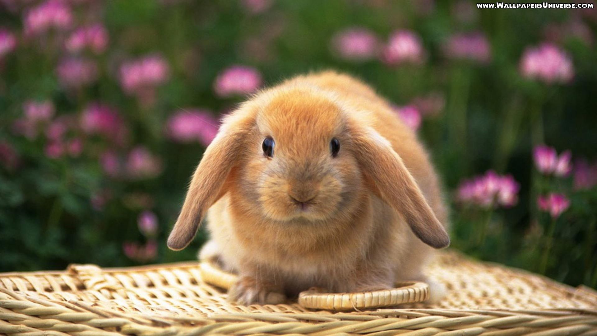 Pics Photos Cute Easter Bunny Rabbits Cute Easter Bunny Rabbit Clip