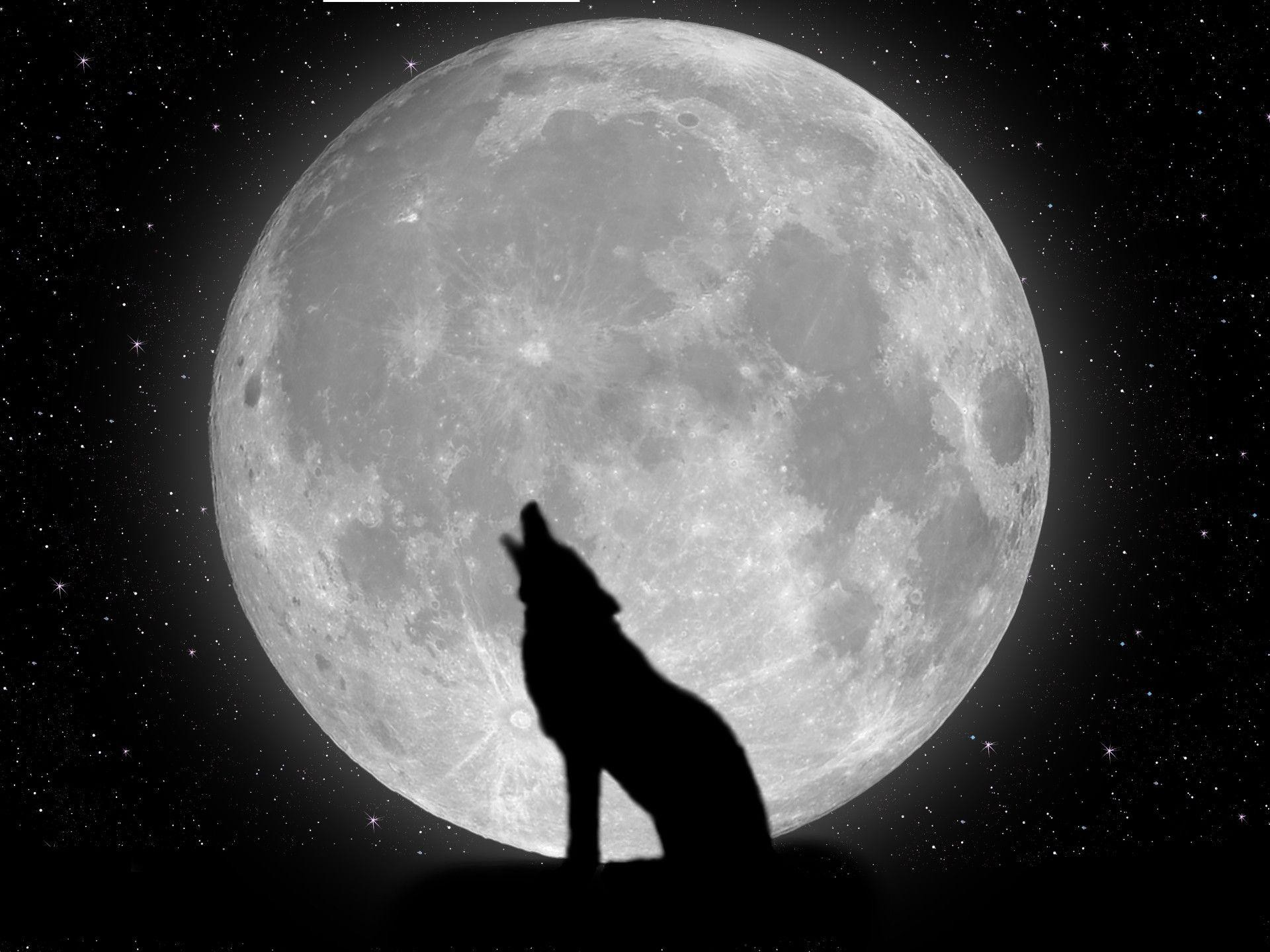 Wallpapers For > Cool Wolf Wallpaper Desktop