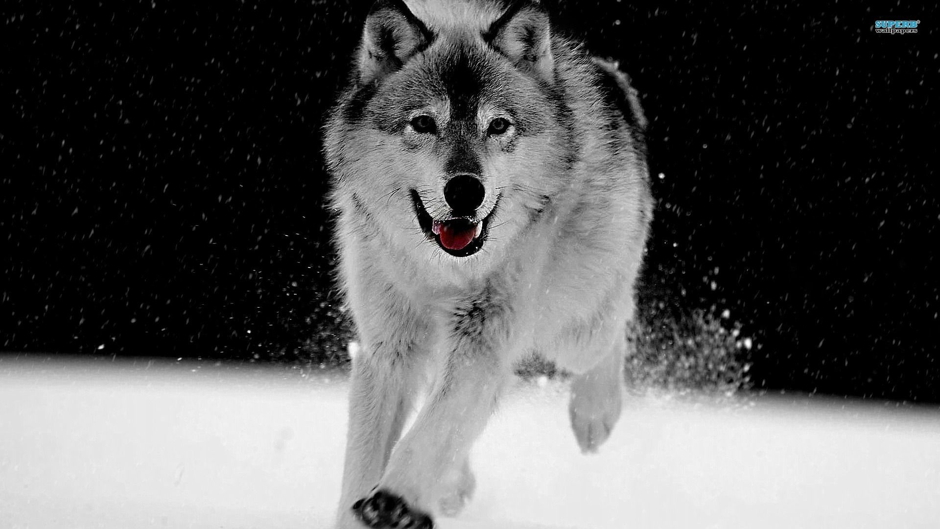 LyhyXX Wallpapers: Awesome Wolf Images, Malia Heer