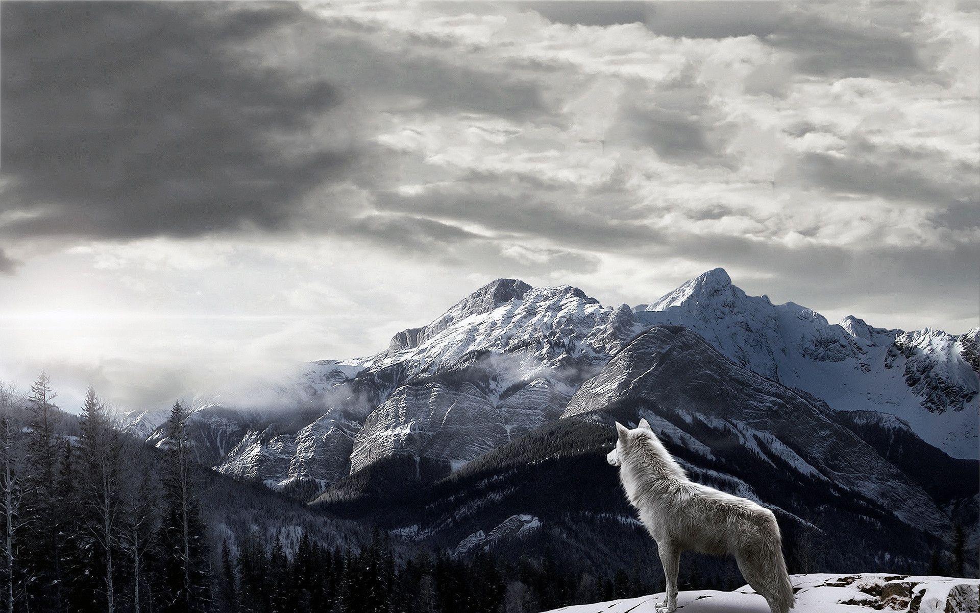 Mountains Gray Wolf Wallpaper