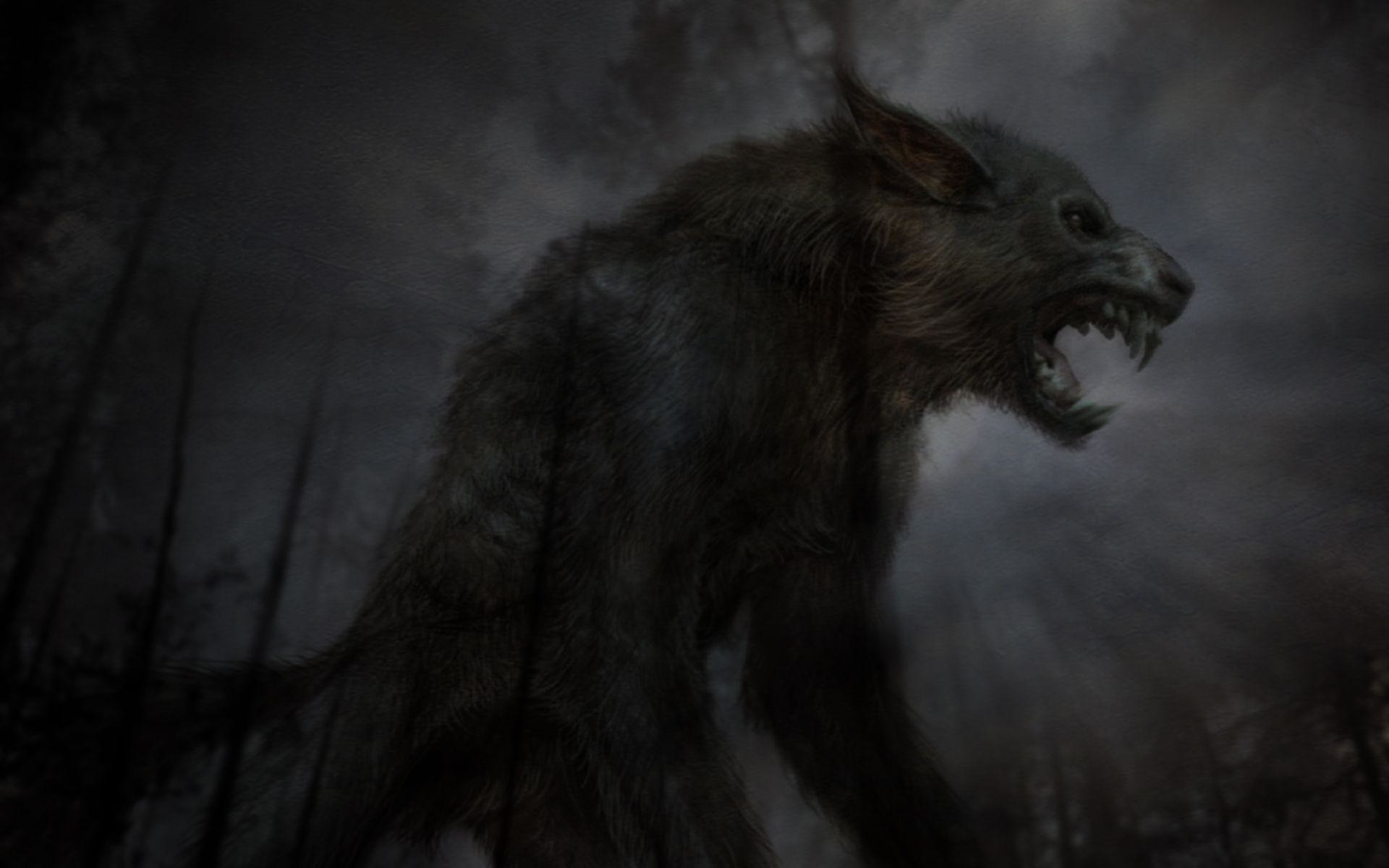 Wolf Desktop Wallpaper | Wolf Backgrounds Pictures | New Wallpapers