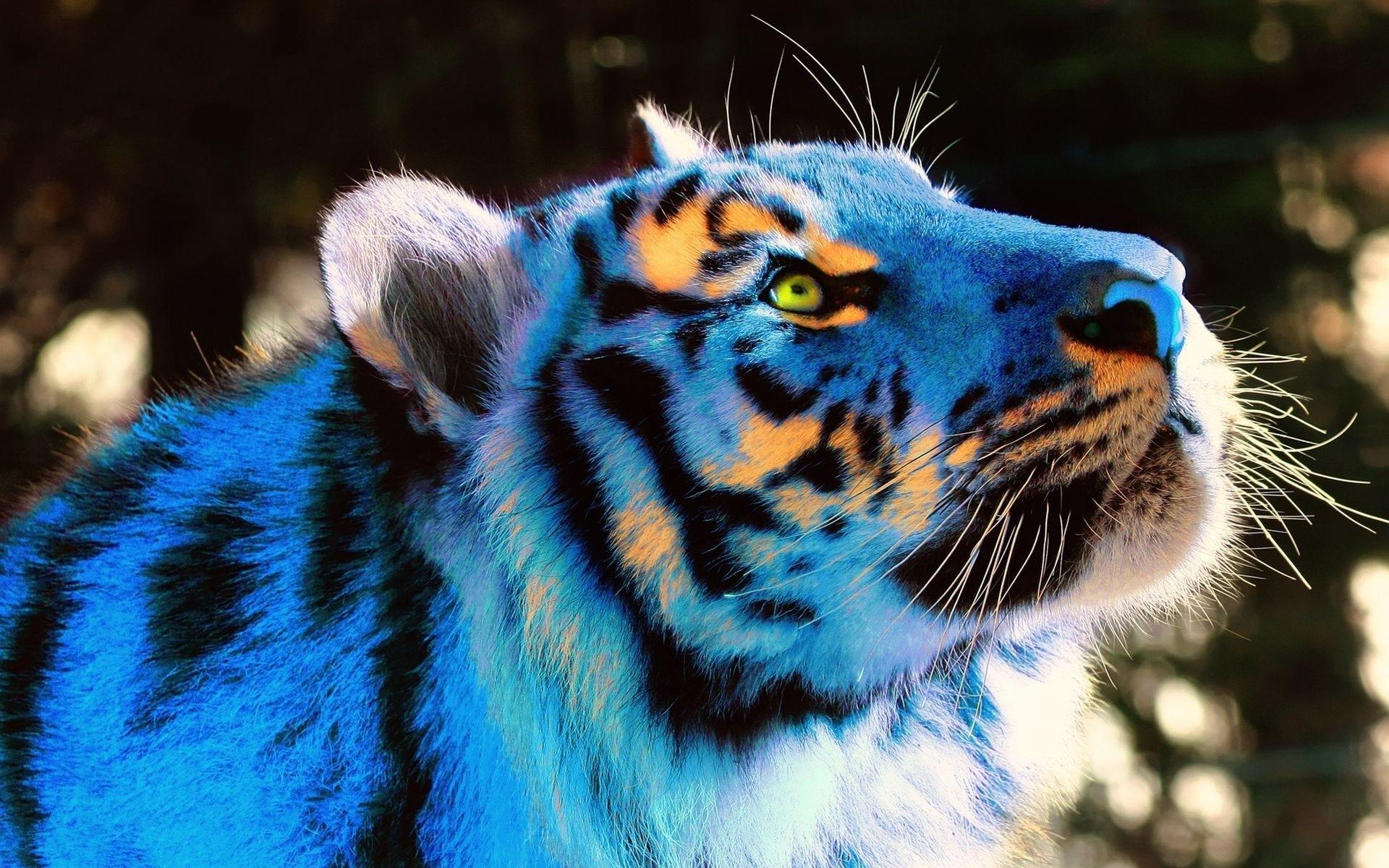 Wallpaper Tiger, Light, Neon, Lights, View