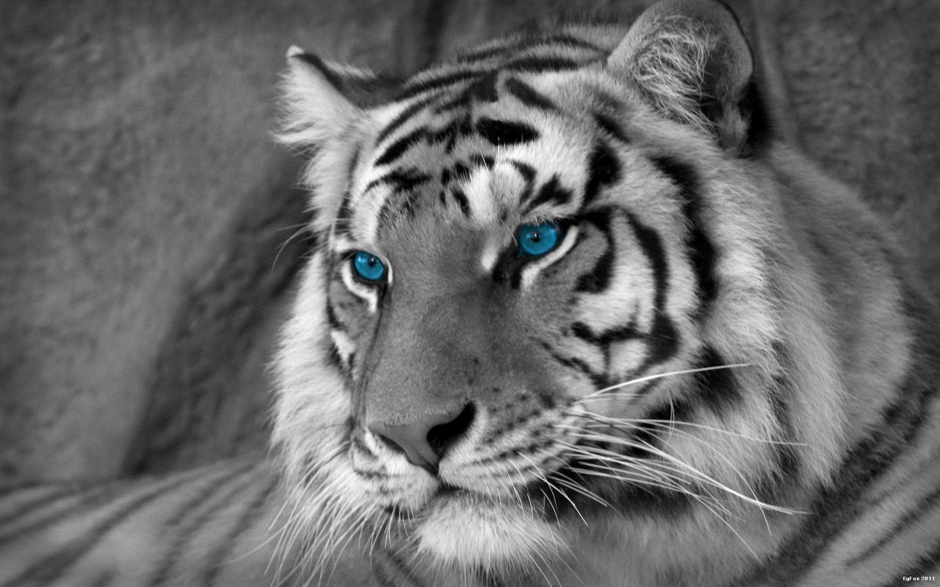 Free <b>White Tiger Wallpaper</b>