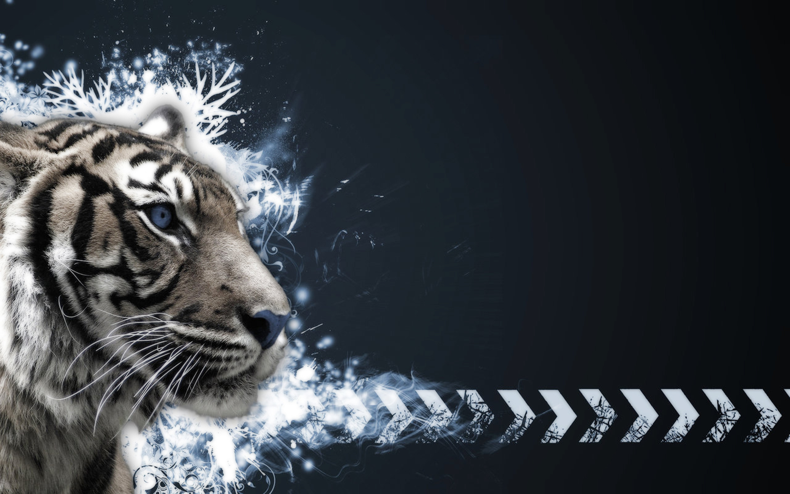 Animal Tiger Wallpaper. Animal Tiger