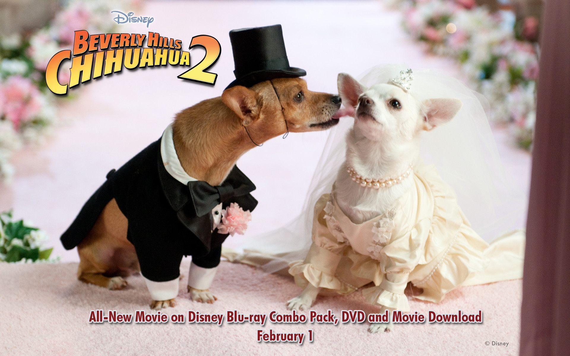 Beverly Hills Chihuahua Wallpapers   Desktop Wallpapers