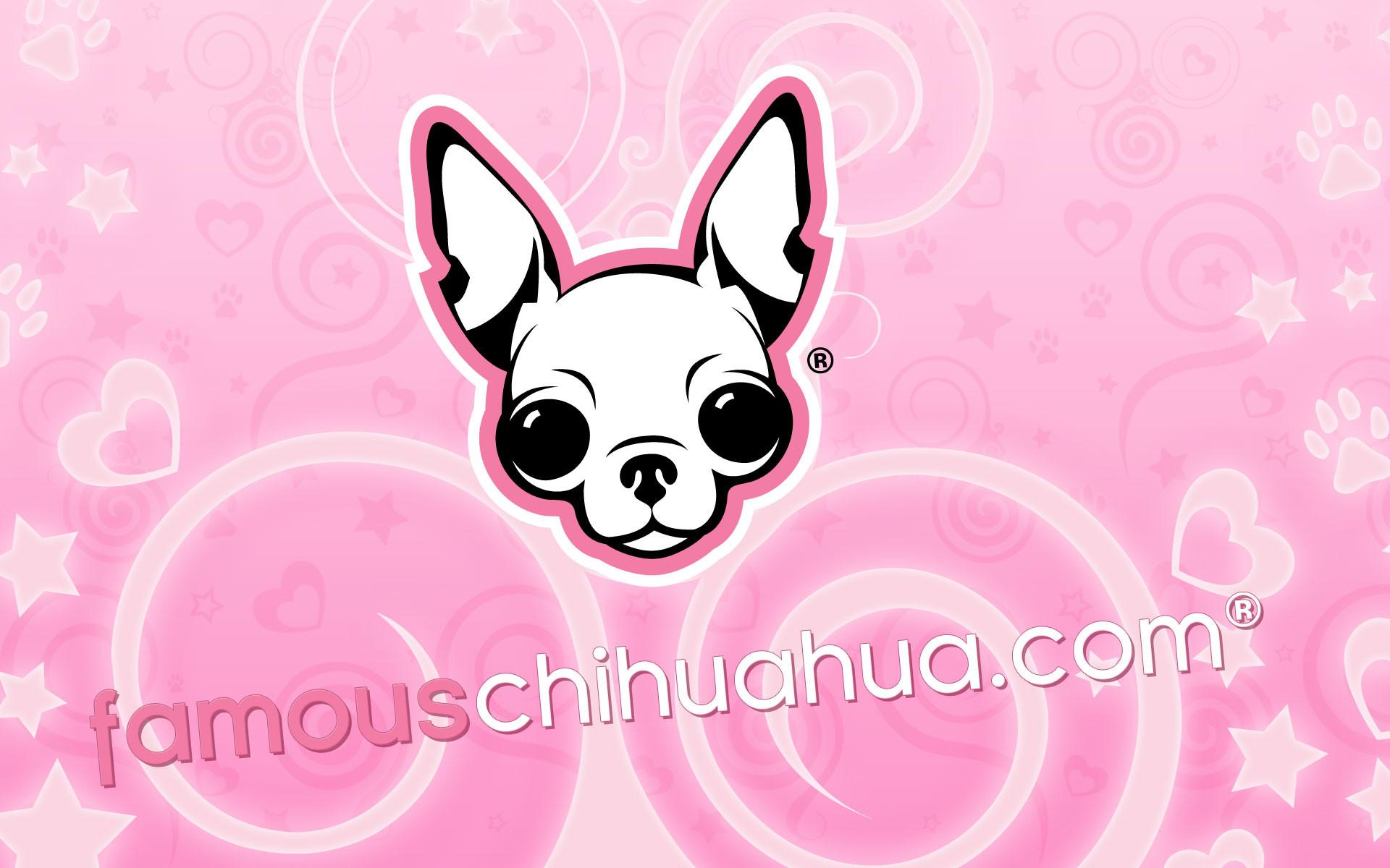 … download famous chihuahua wallpaper (size:1920×1200 pixels)