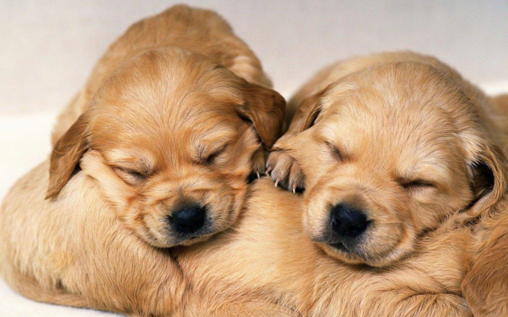Puppies Wallpapers – Full HD wallpaper search – page 3