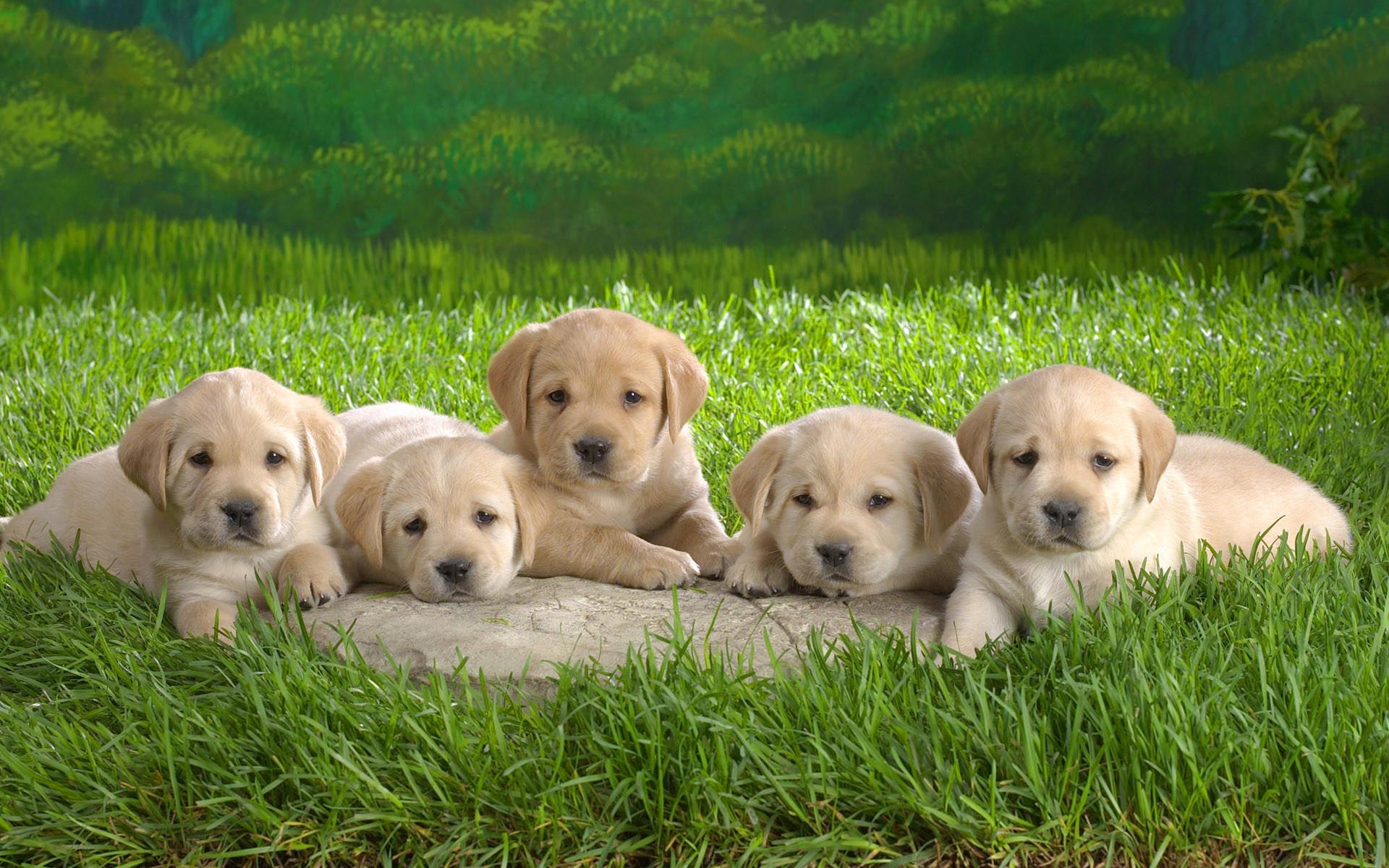 dog-wallpaper-desktop-107 – The Dog Wallpaper – Best The Dog Wallpaper