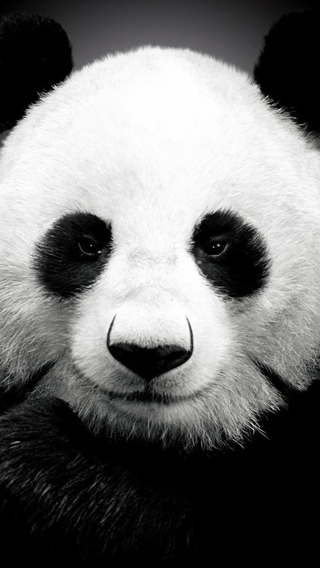 iPhone 6 plus Panda HD Wallpaper