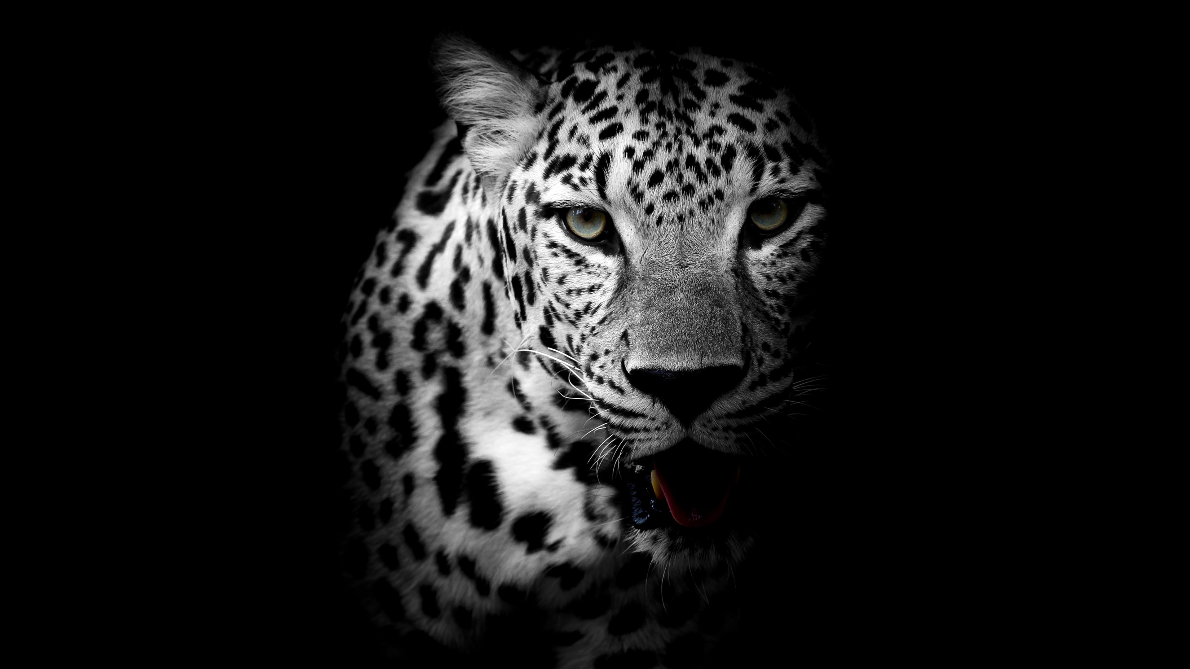 Leopard Black HD Wallpaper