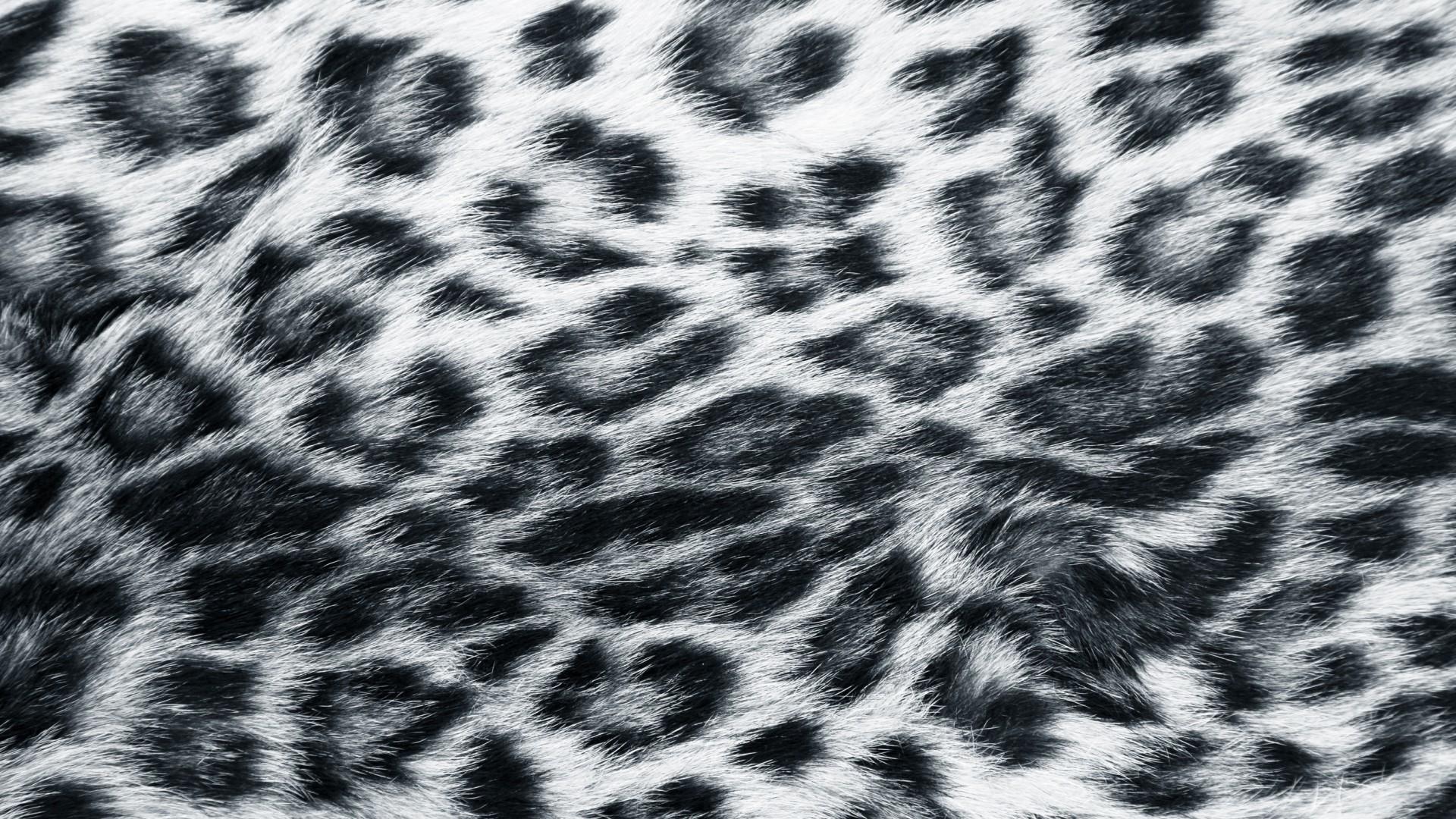 Explore Leopard Print Wallpaper and more!