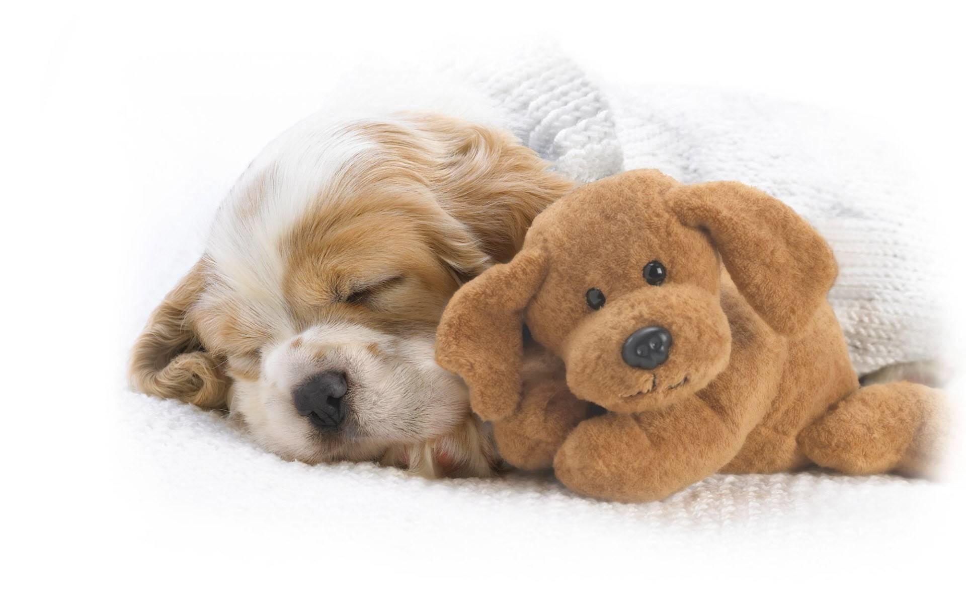 cute-puppy-wide-wallpaper – Dogs Wallpaper