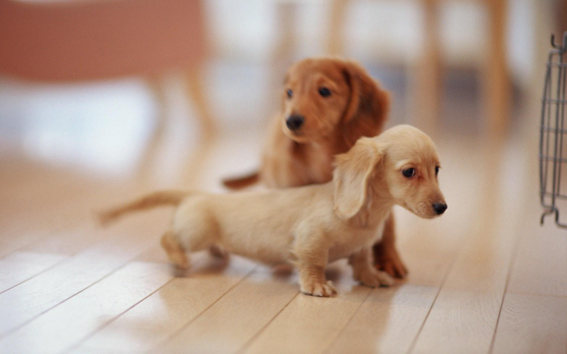 Cute Puppies Hd Pictures And Wallpapers   ImgStocks.com