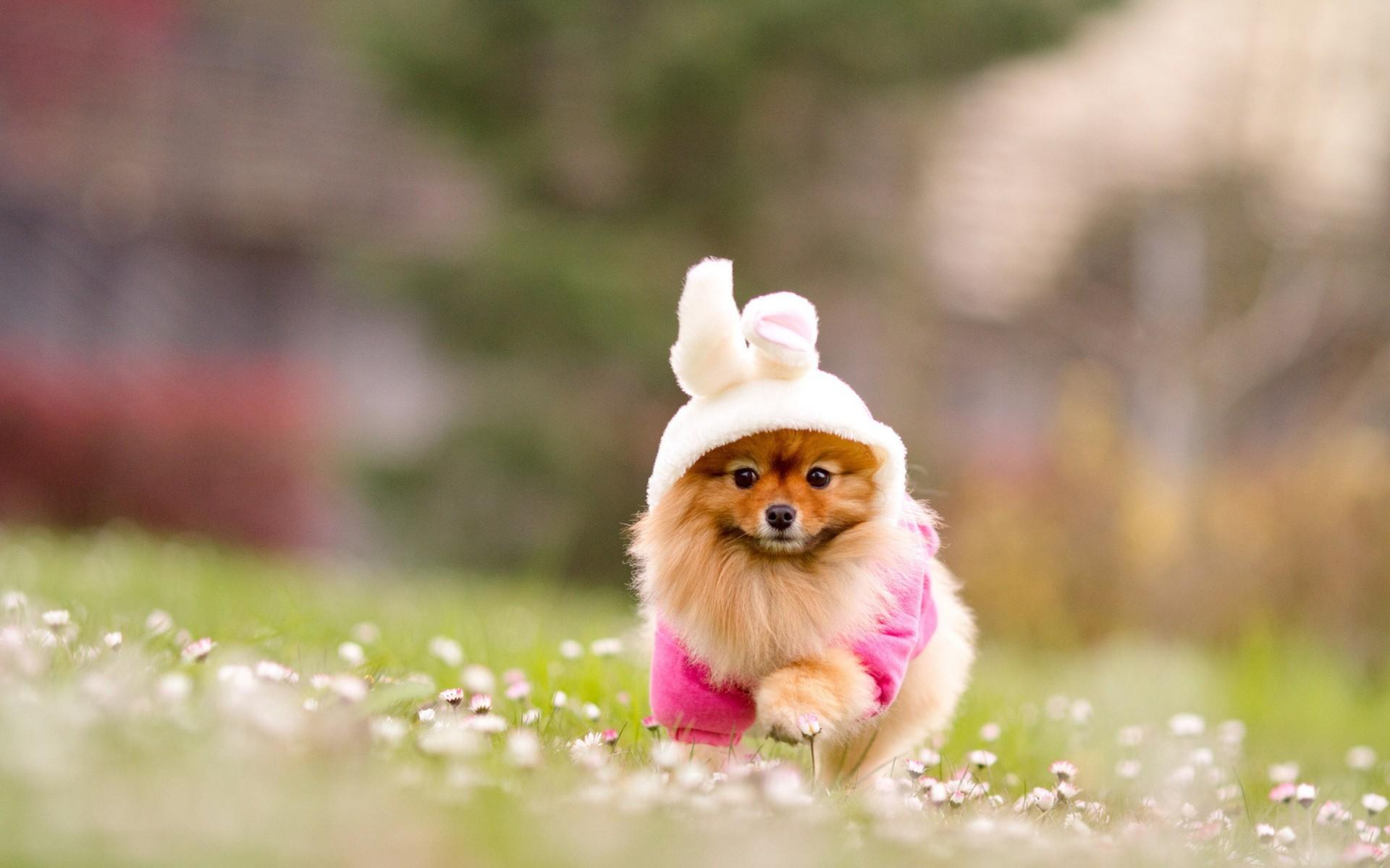 Cute Puppies HD Backgrounds   WallpapersCharlie