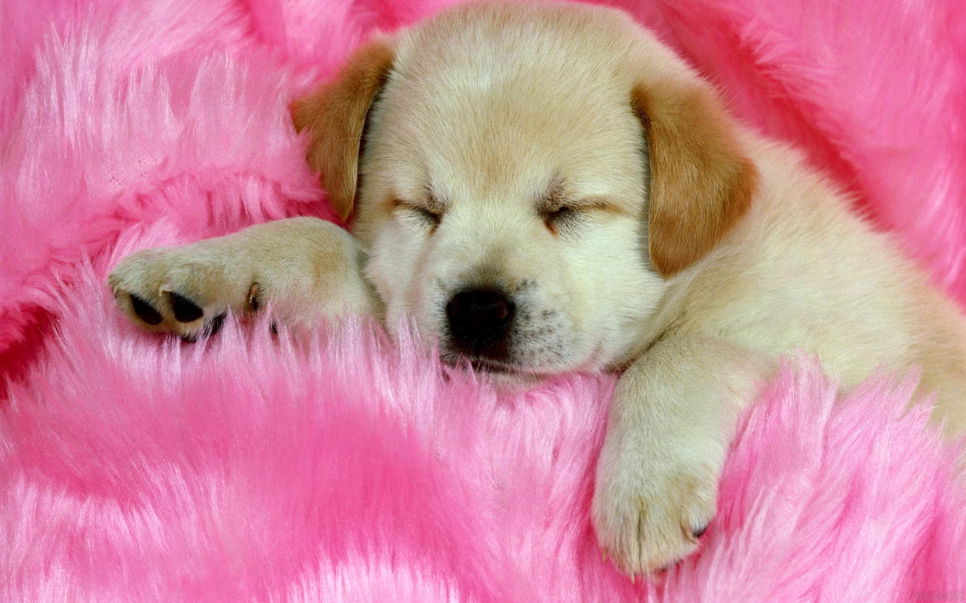 Puppy cute puppies photos free download – Widescreen Wallpaper