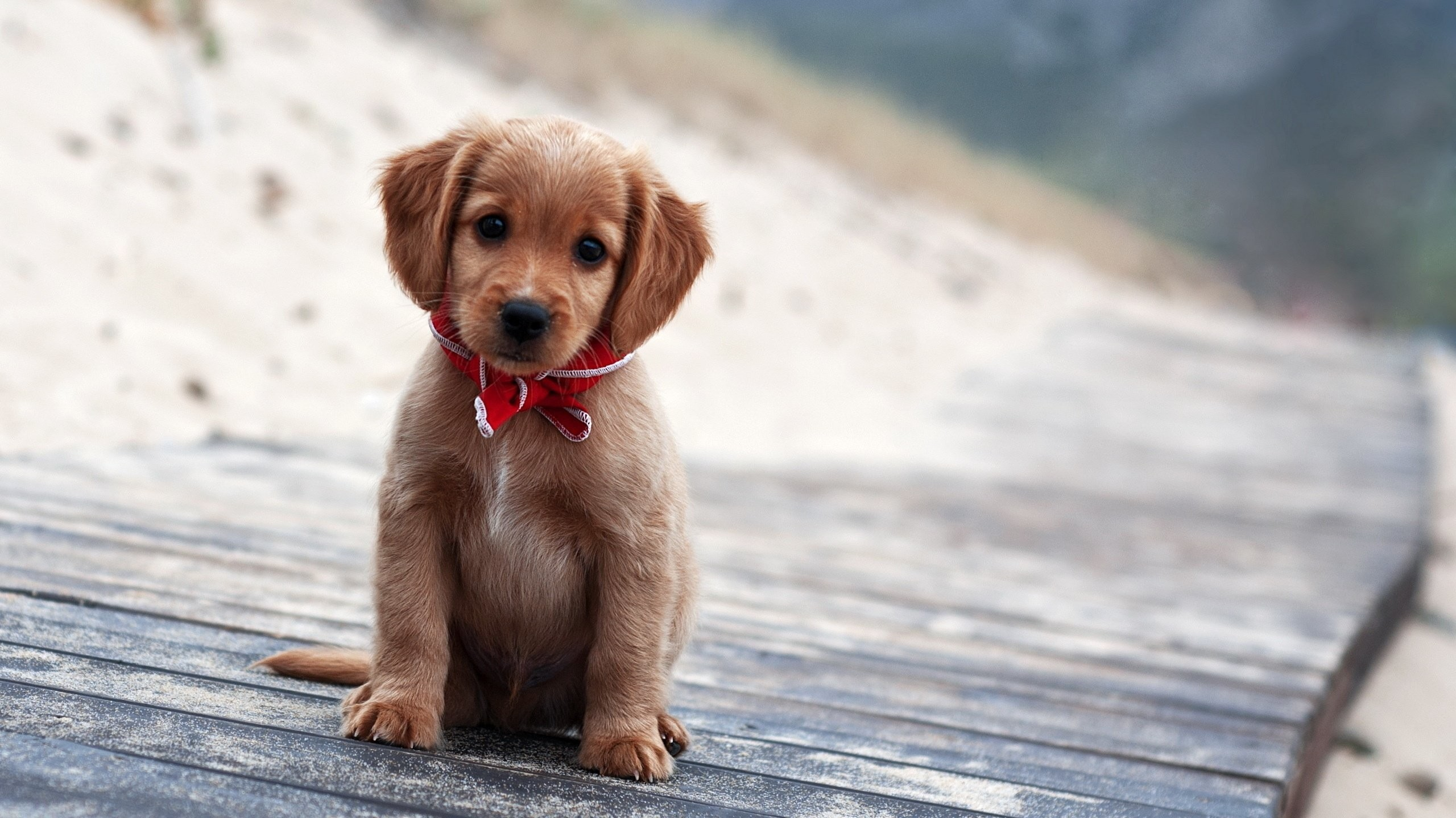 Free Download Cute Puppy Image.