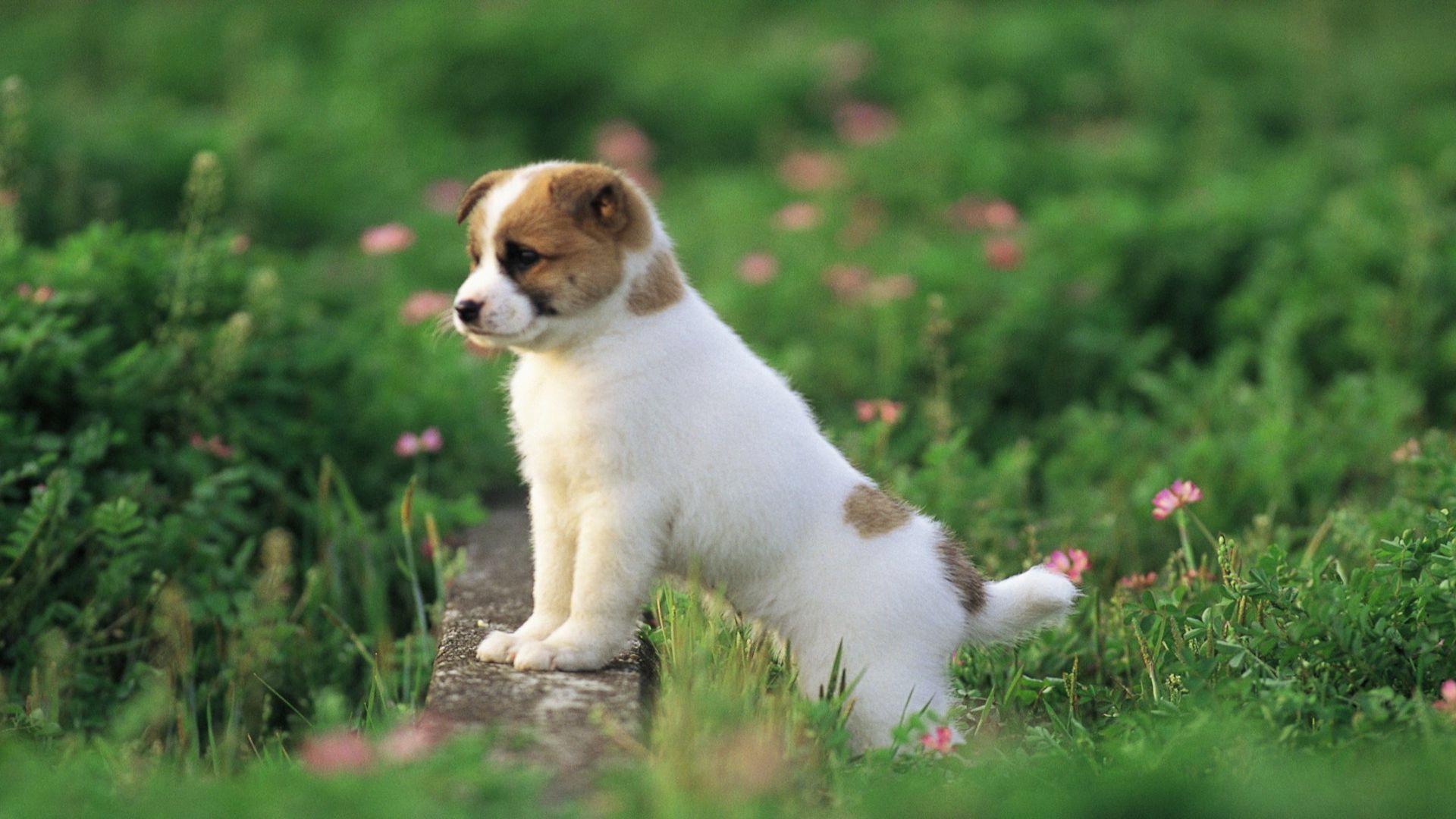 9. cute-puppy-wallpaper9-600×338