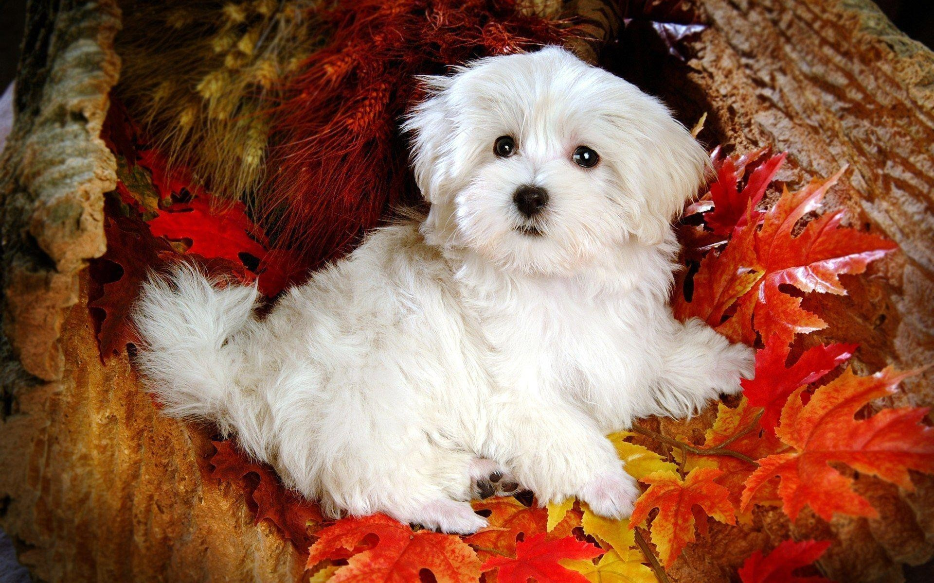 Cute Dog Wallpaper   Cute Puppy Dog Image   Cool Wallpapers