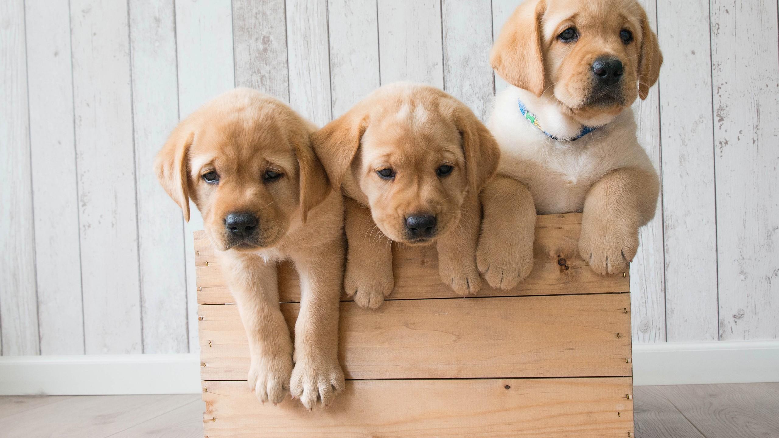 Animals / Cute puppies Wallpaper
