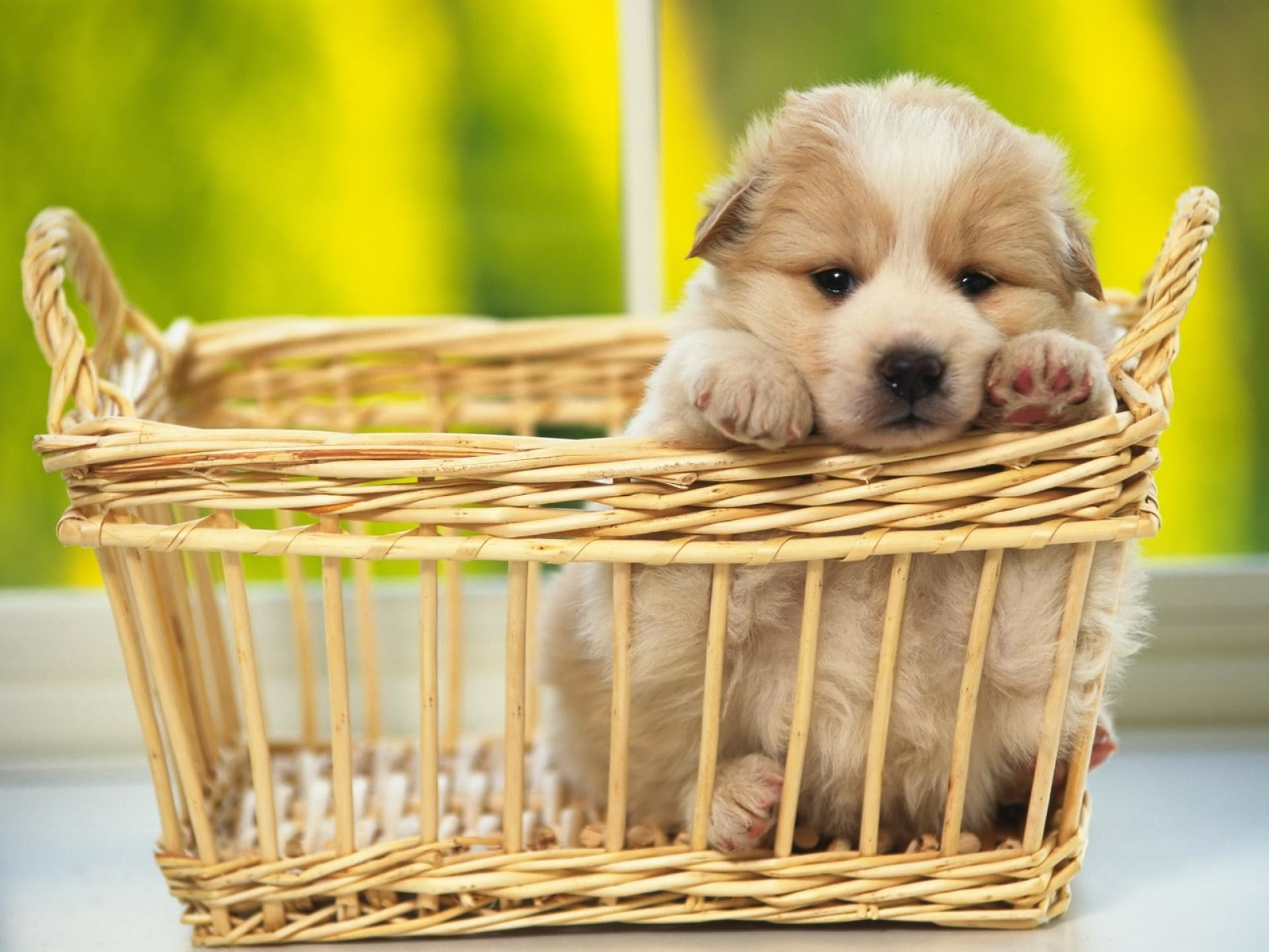 HD Cute Puppy Wallpaper 1249×1049 Cute Pics Of Puppies Wallpapers (44  Wallpapers)