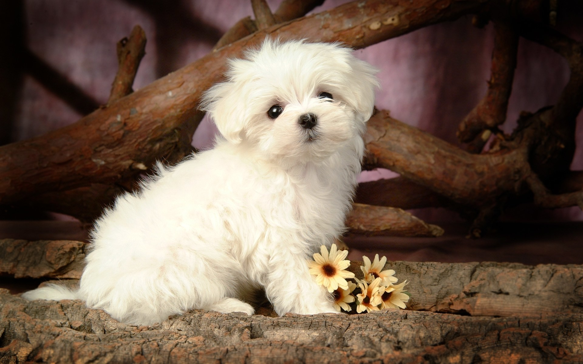 cute puppy pictures free download