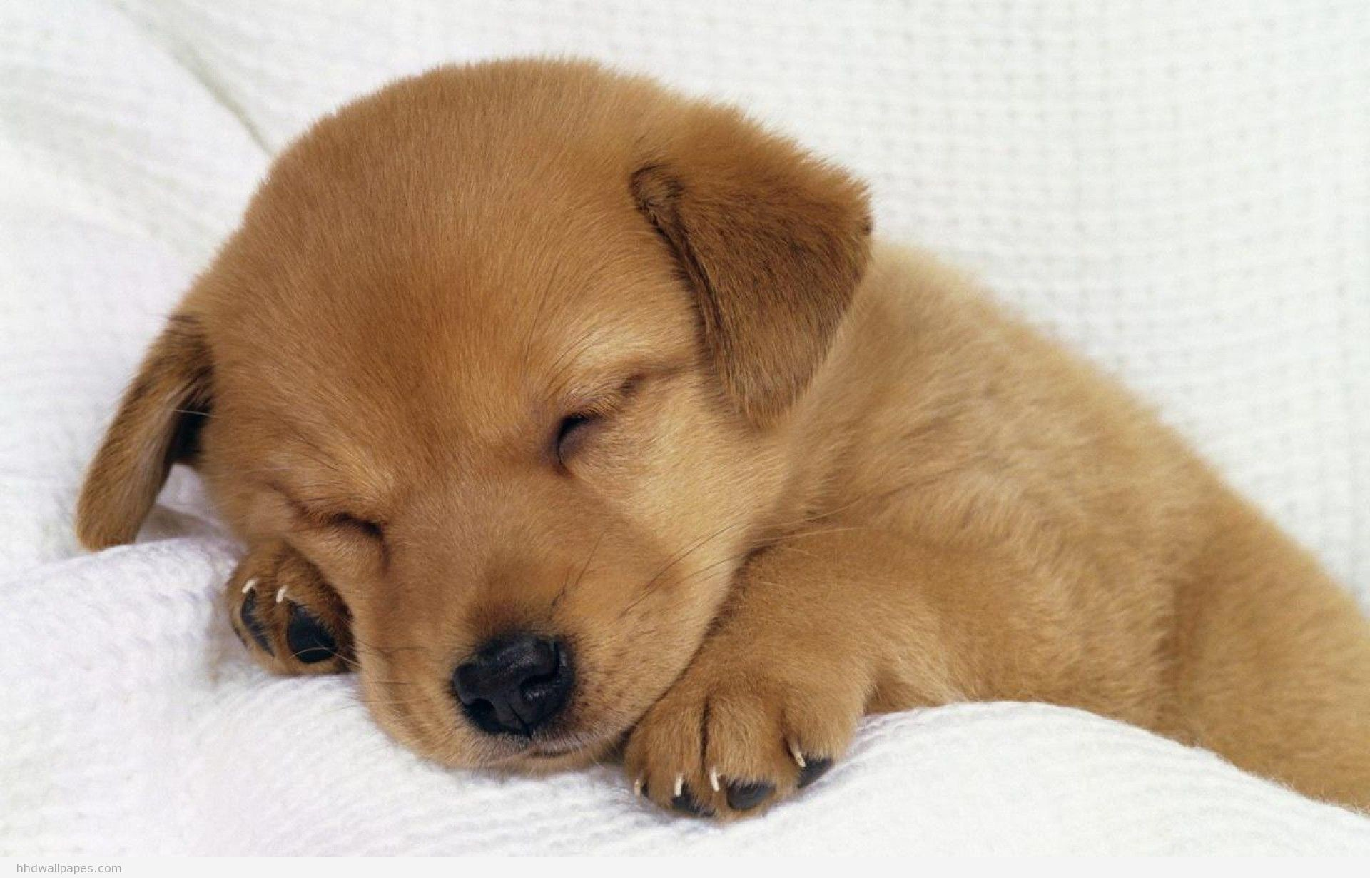 Cute Dog Wallpapers 8694 Hd Wallpapers in Animals – Imagesci.com