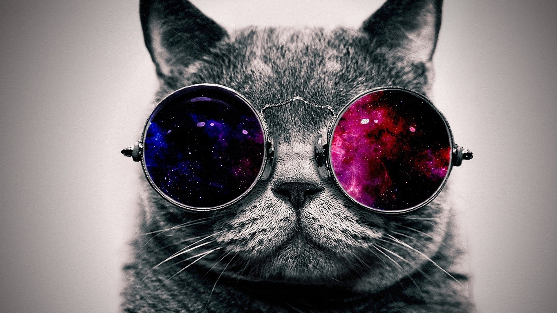 Preview wallpaper cat, face, glasses, thick 1920×1080