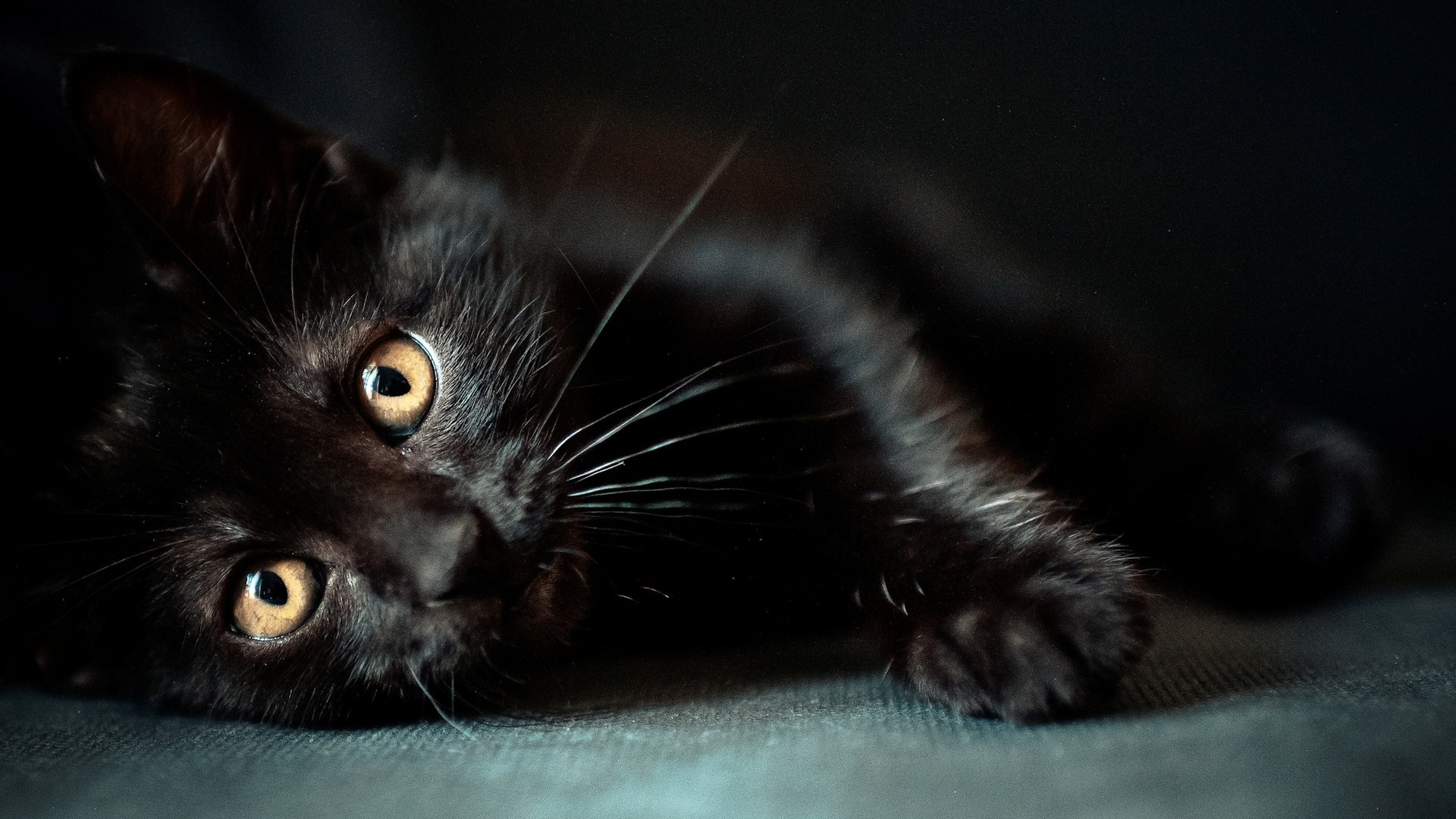 cat, Animals, Black Cats Wallpapers HD / Desktop and Mobile Backgrounds