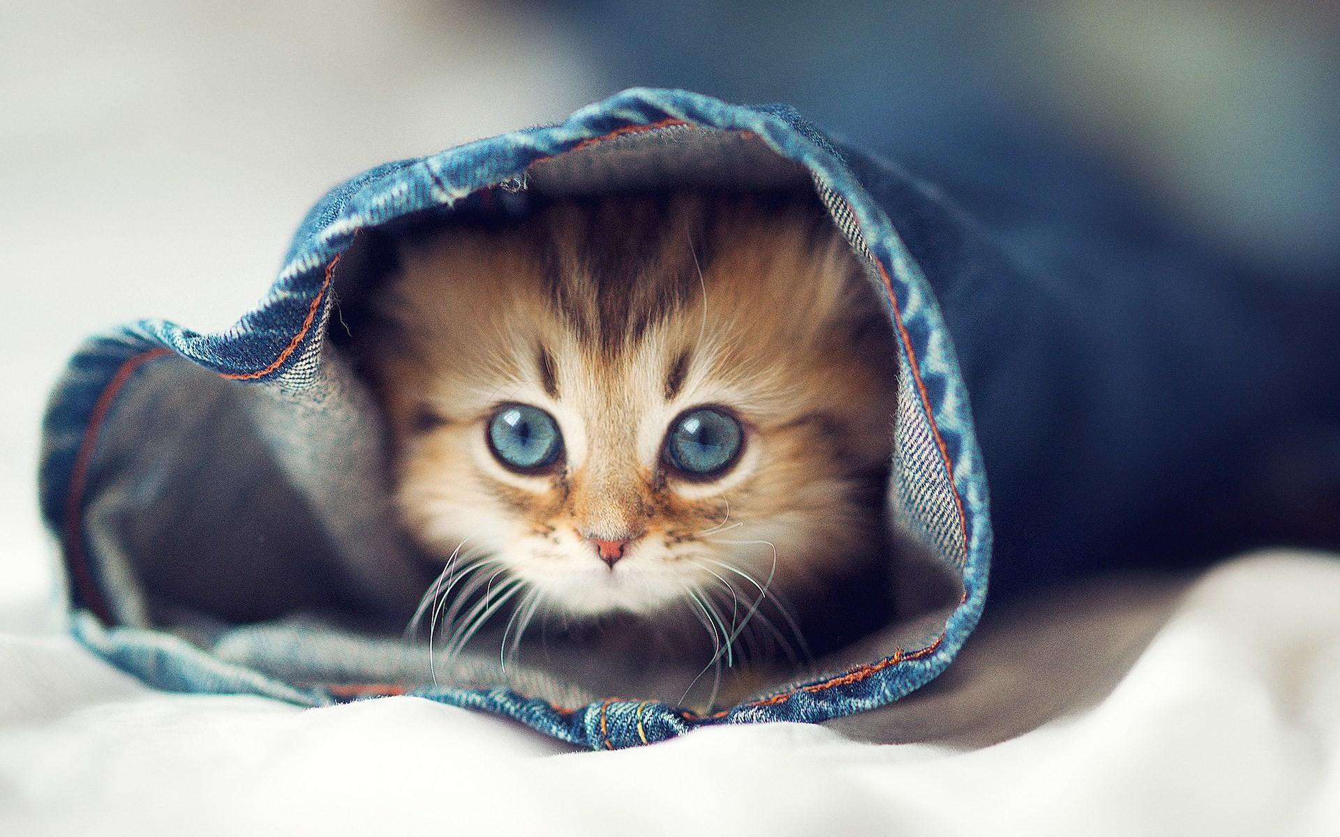 Top HDQ Cute Cat Images