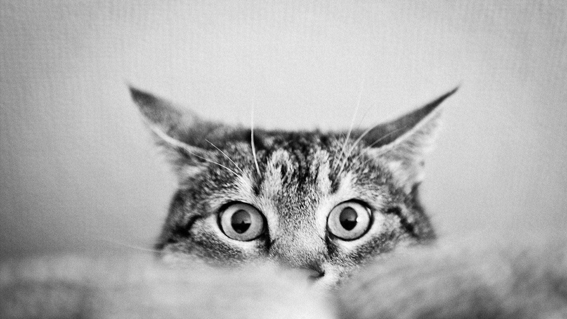 Images For > Black And White Cat Photography Wallpaper