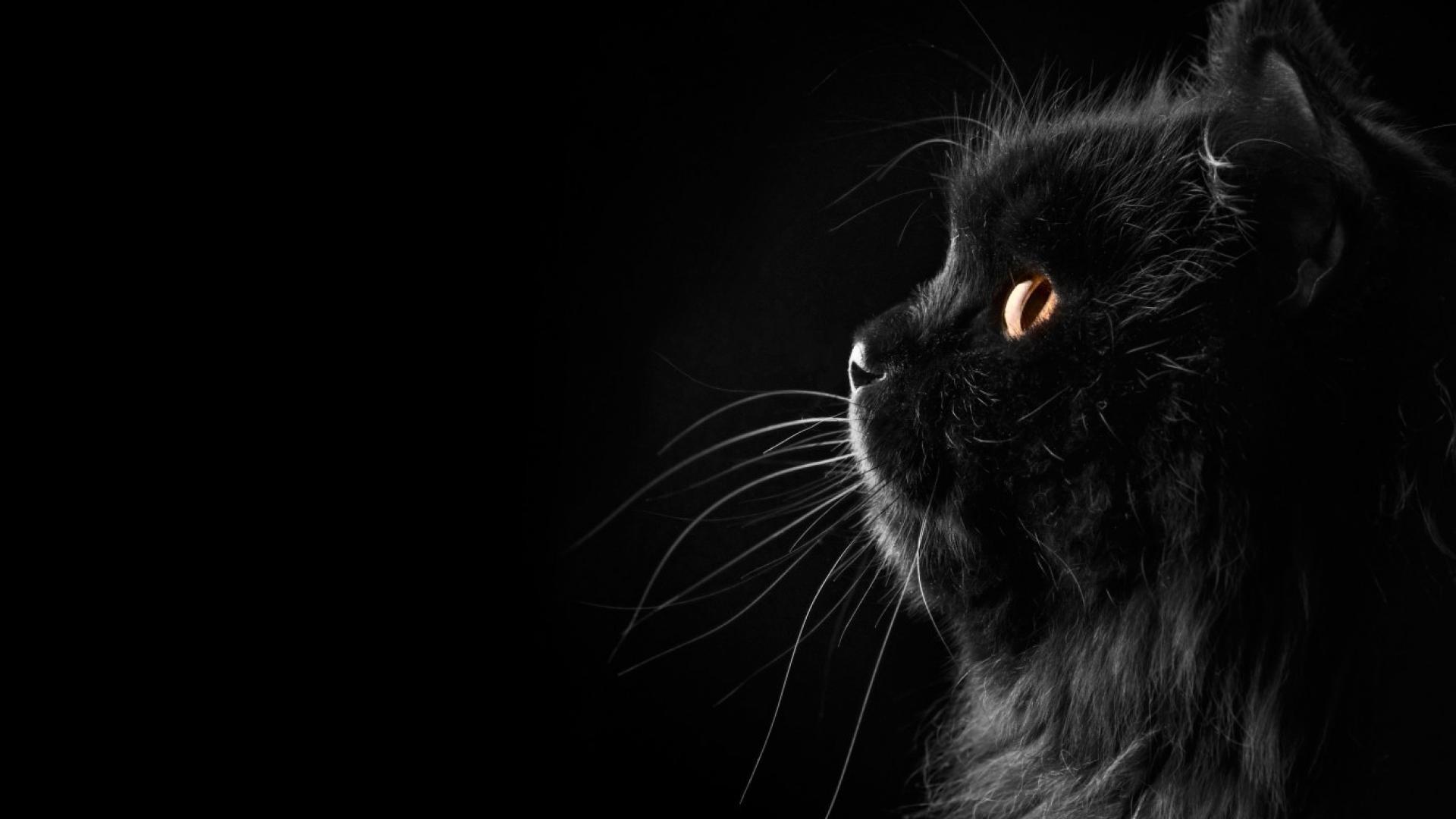 Black Cat Wallpaper 3002 HD Wallpapers   pictwalls.