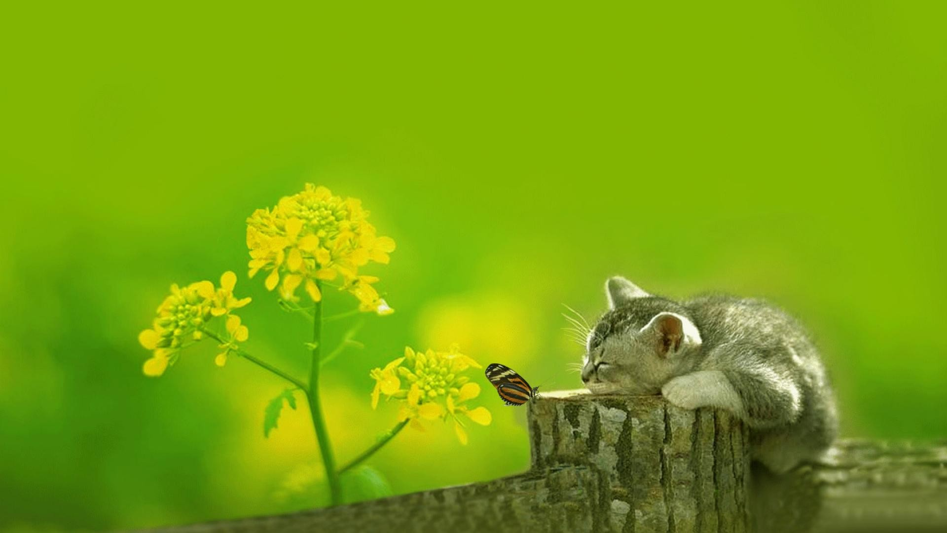 Cute Cat Wallpaper [1920×1080] Need #iPhone #6S #Plus #Wallpaper/ # Background for #IPhone6SPlus? Follow iPhone 6S Plus 3Wallpapers/ # Backgrounds Mu…