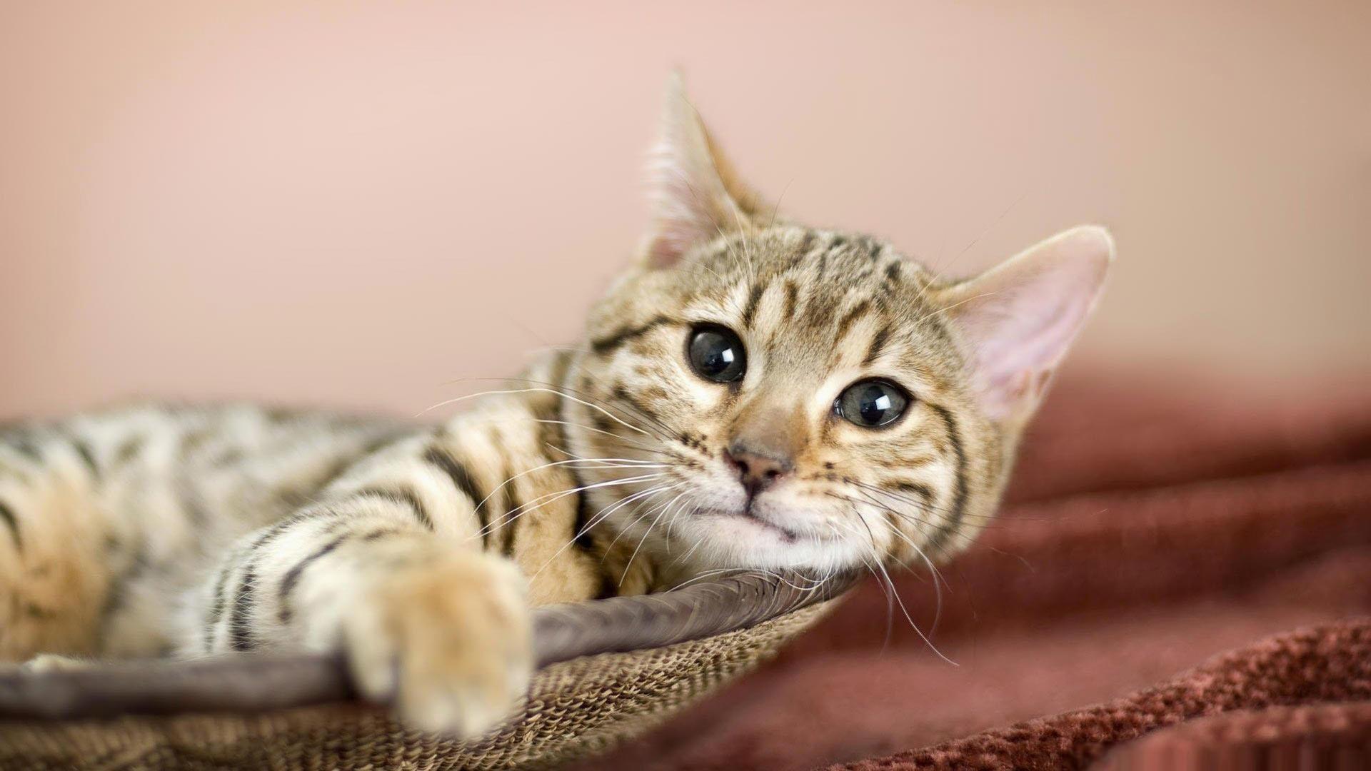 5. cat-wallpaper-High-Resolution-Download5-600×338