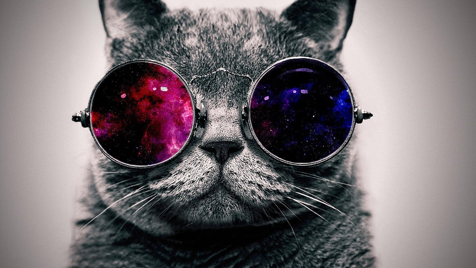 Beautitful Cats Sunglasses Wallpaper Cats Sunglasses Desktop Wallpaper